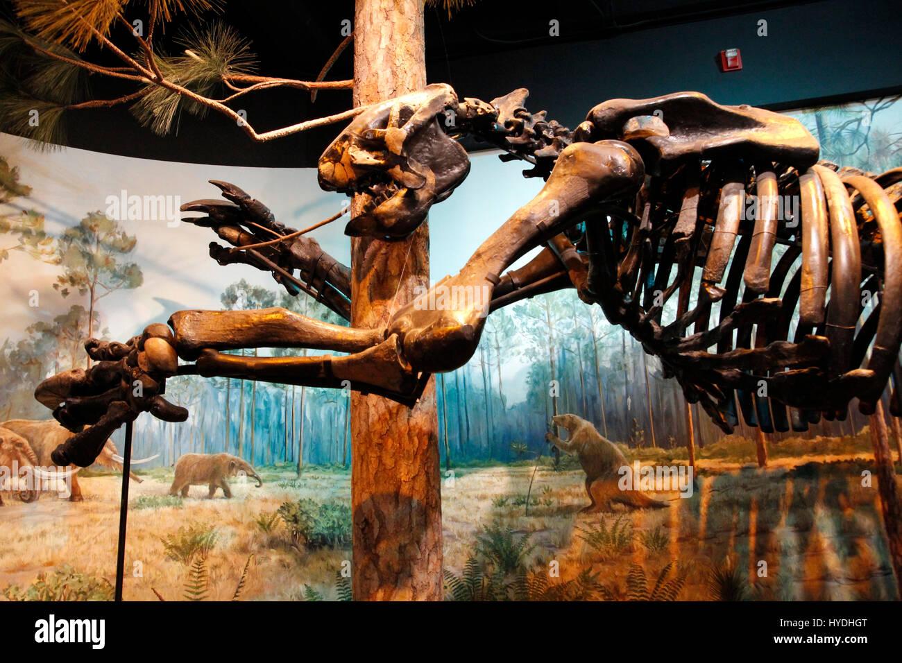 Carolina del nord e il museo di scienze naturali di Raleigh Immagini Stock