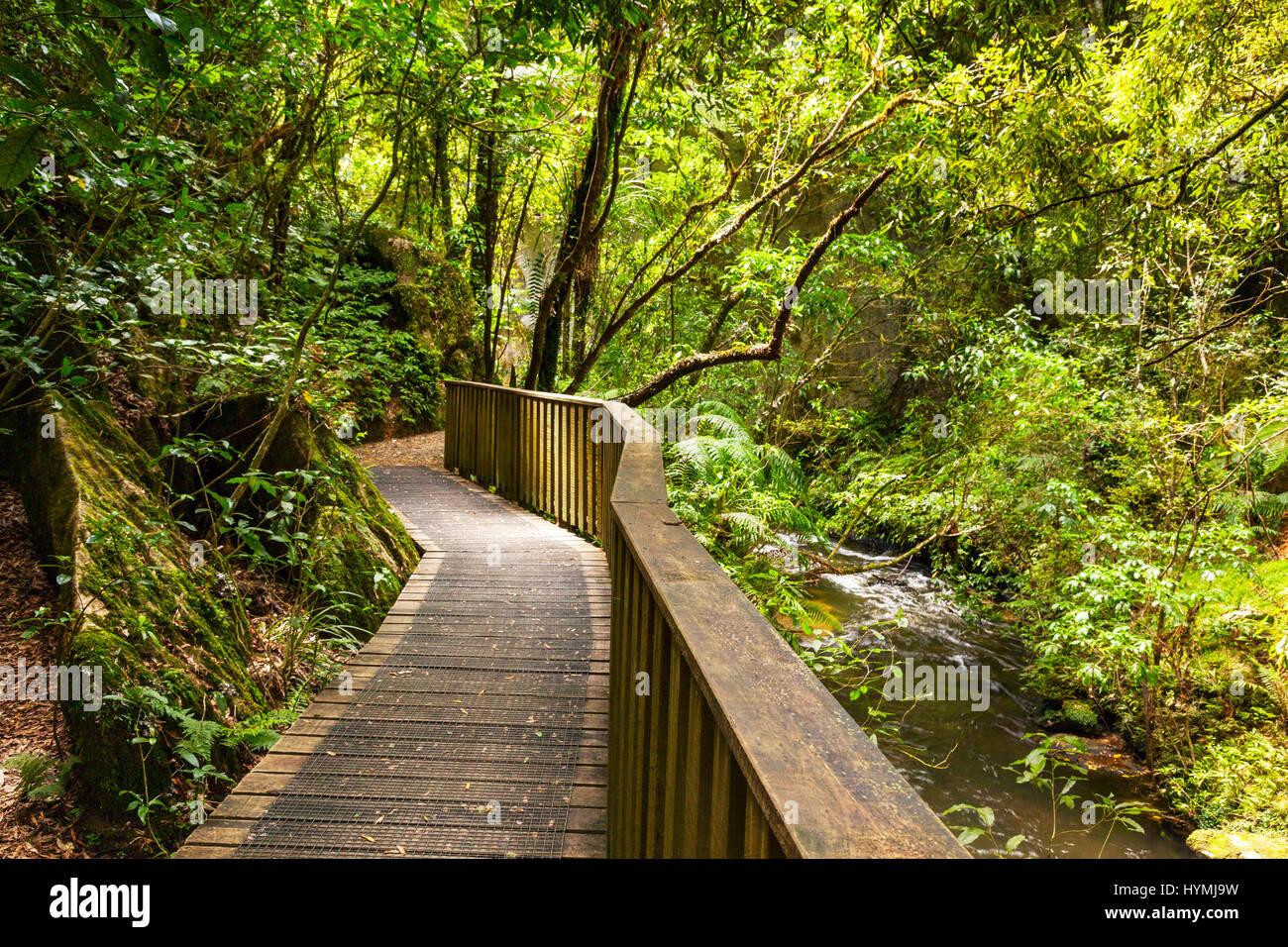 Percorso attraverso la Nuova Zelanda la macchia nativa, Mangapohue ponte naturale, Distretto di Waitomo, Waikato, Immagini Stock