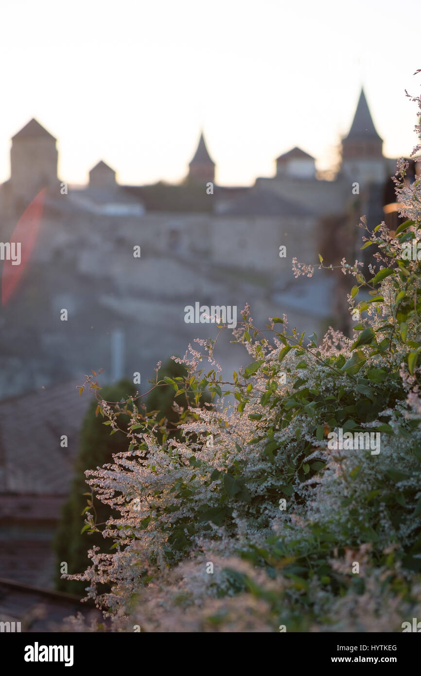 Inquadratura sfocati del castello di kamianets-podilskyi in Ucraina occidentale. focus su una boccola di fioritura Foto Stock