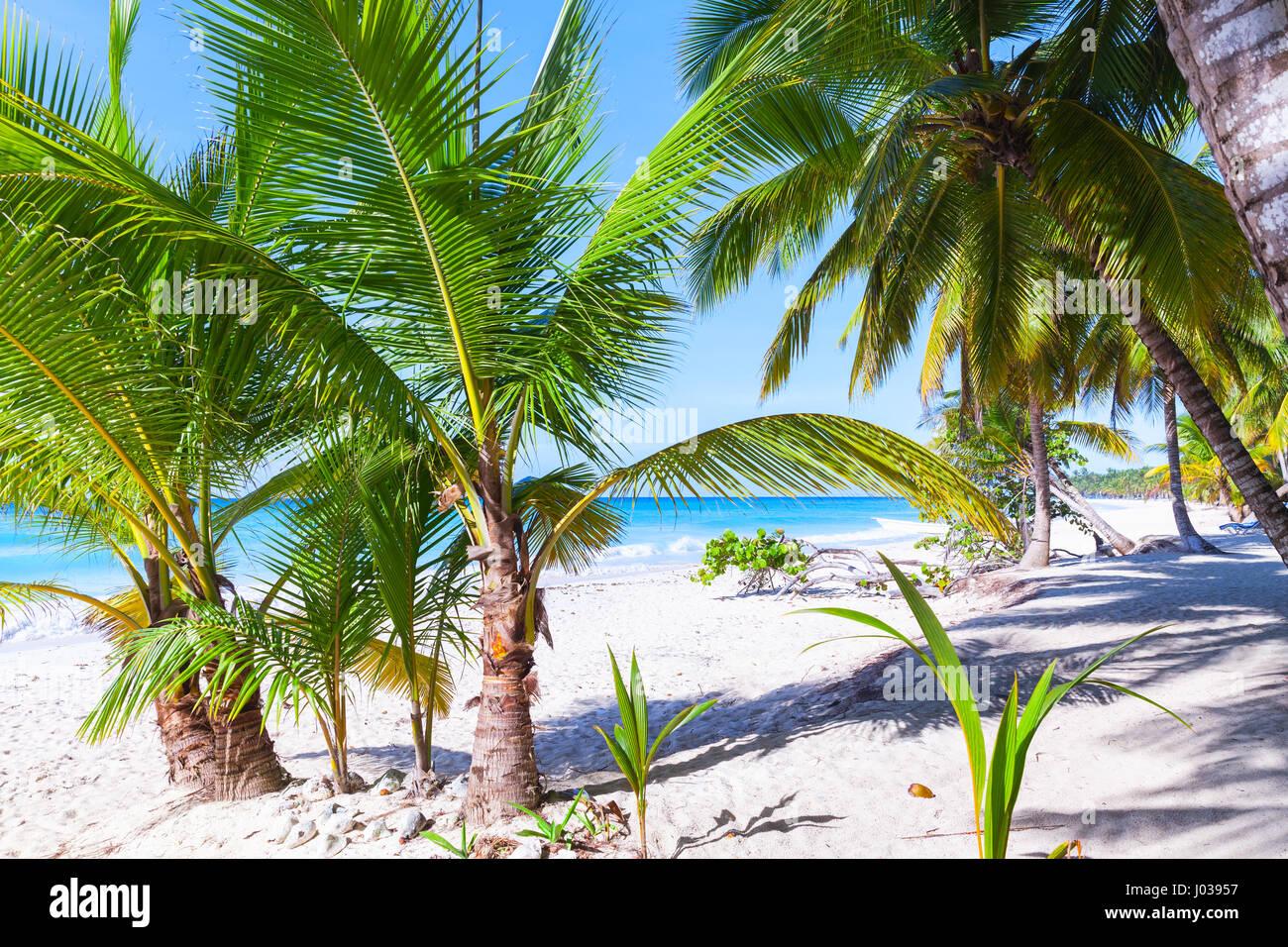 Crescere palme sulla spiaggia. Mar dei Caraibi bianco costa sabbiosa, Repubblica dominicana, Saona Island Immagini Stock