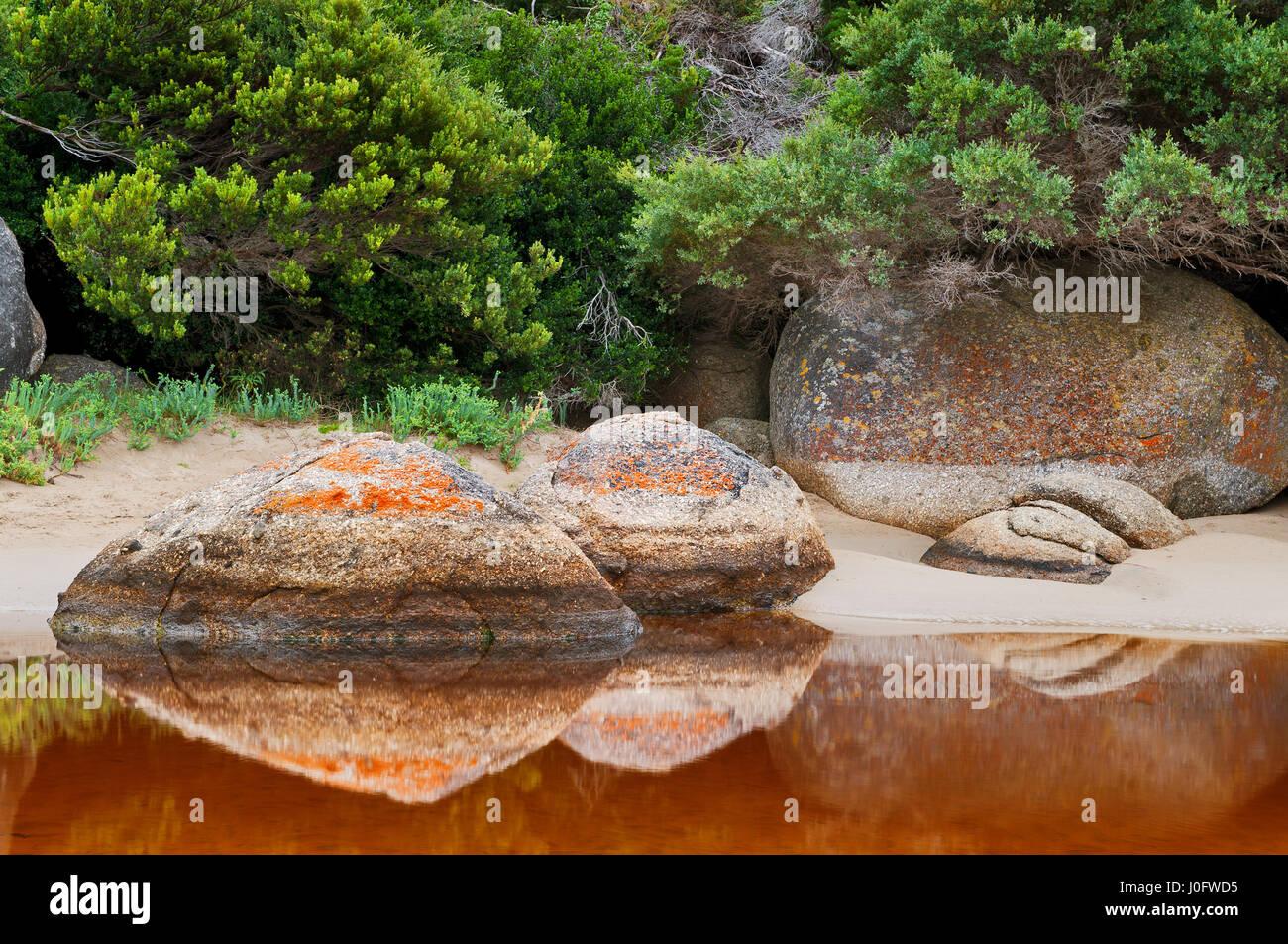 Il Lichen coperto rocce di fiume di marea in Wilsons Promontory National Park. Immagini Stock