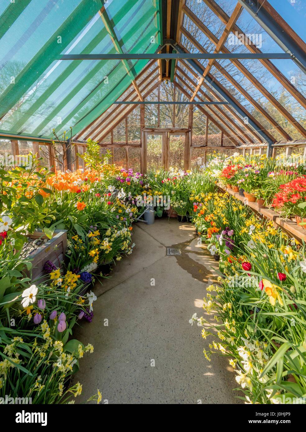 Serra piena di fiori di primavera Foto Stock