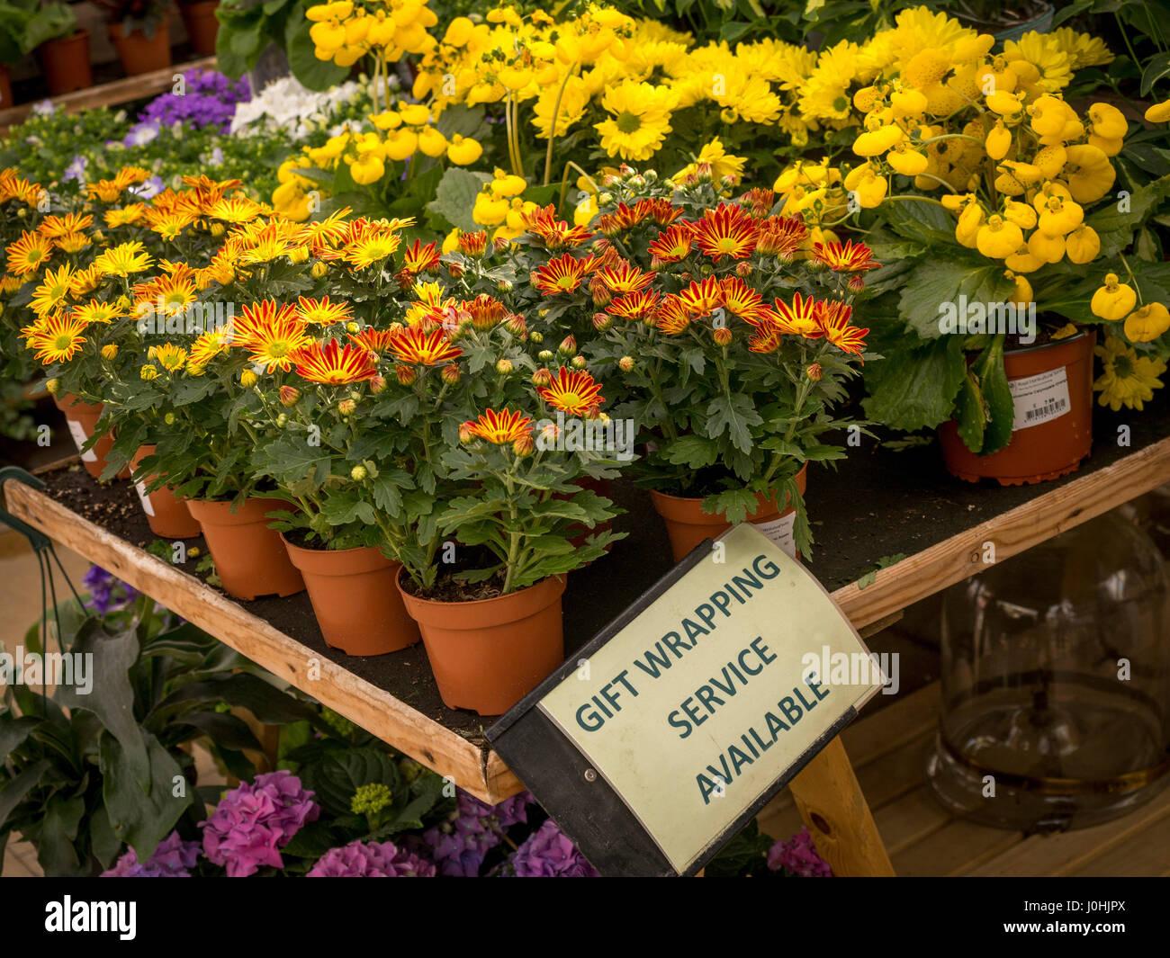 """"""" Servizio di confezionamento pacchi regalo disponibile' firmare su piante di flowering display per la Immagini Stock"""