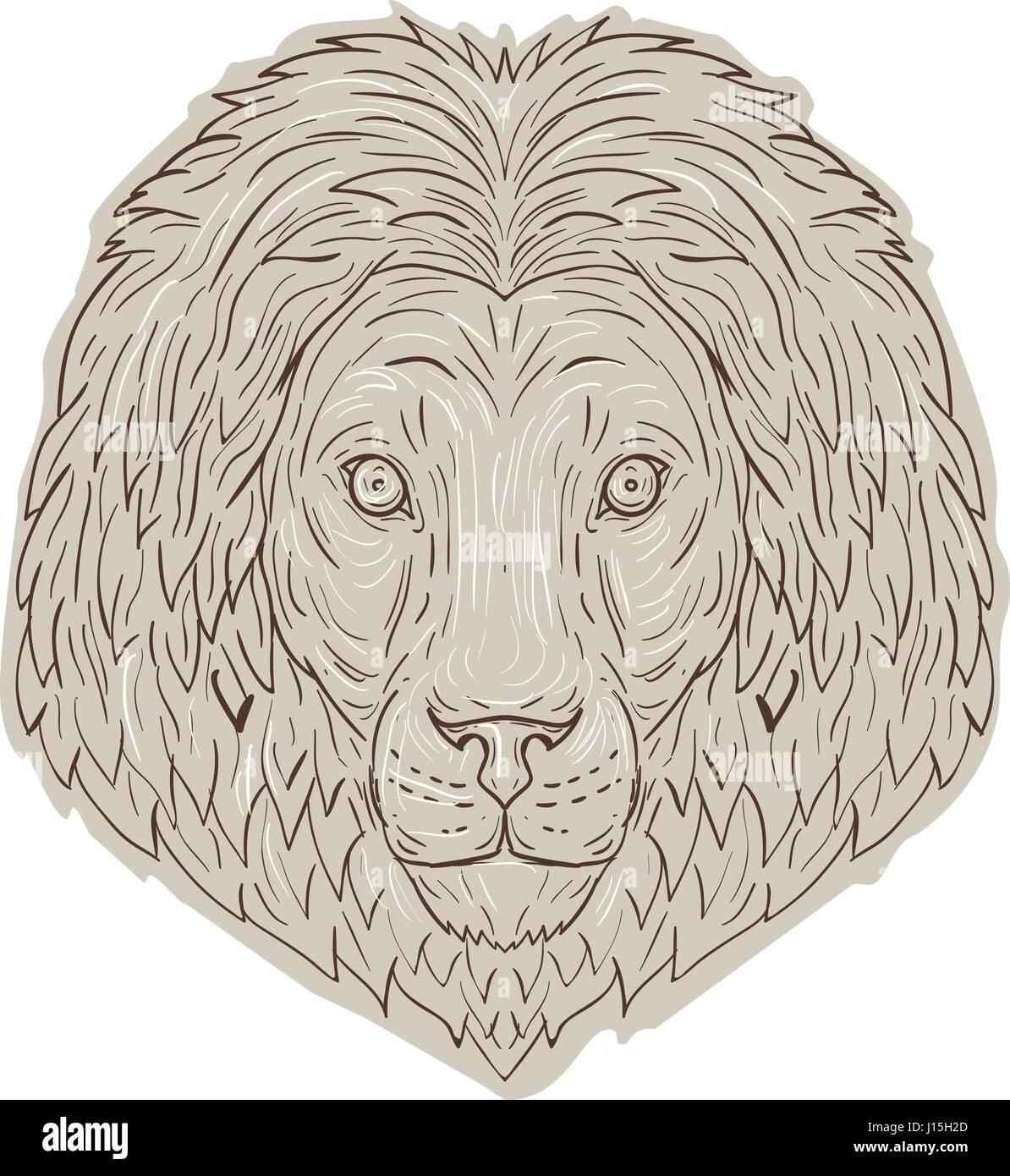 Schizzo Di Disegno Illustrazione Dello Stile Di Un Leone Gatto
