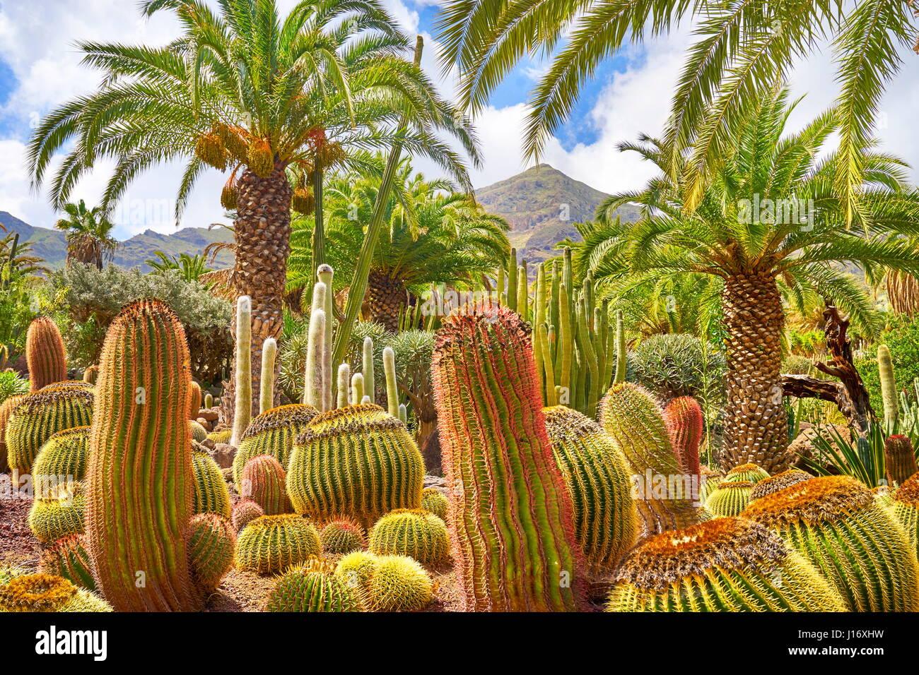Il Giardino dei Cactus, Gran Canaria, Spagna Immagini Stock