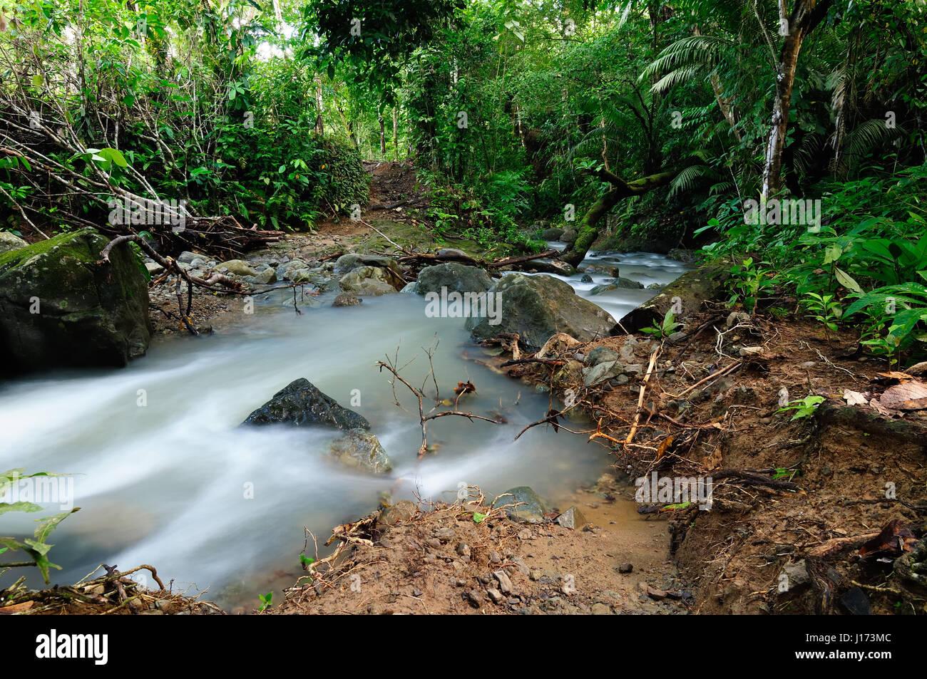 Panama, wild Darien la giungla vicino al confine della Colombia. America centrale Immagini Stock