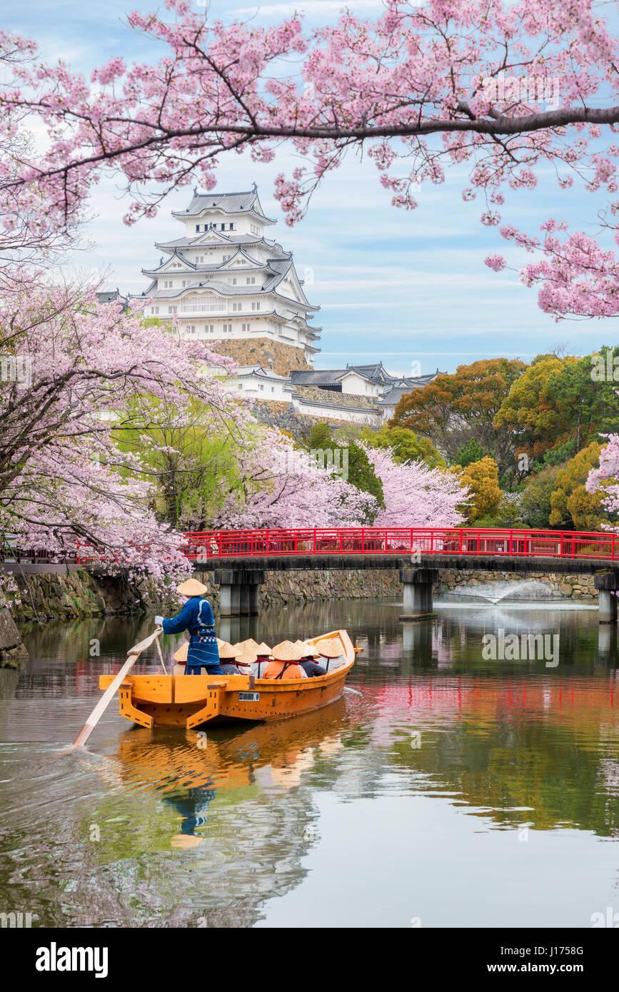 Il castello di Himeji con splendidi fiori di ciliegio in primavera, a Hyogo vicino a Osaka, Giappone. Il castello Immagini Stock