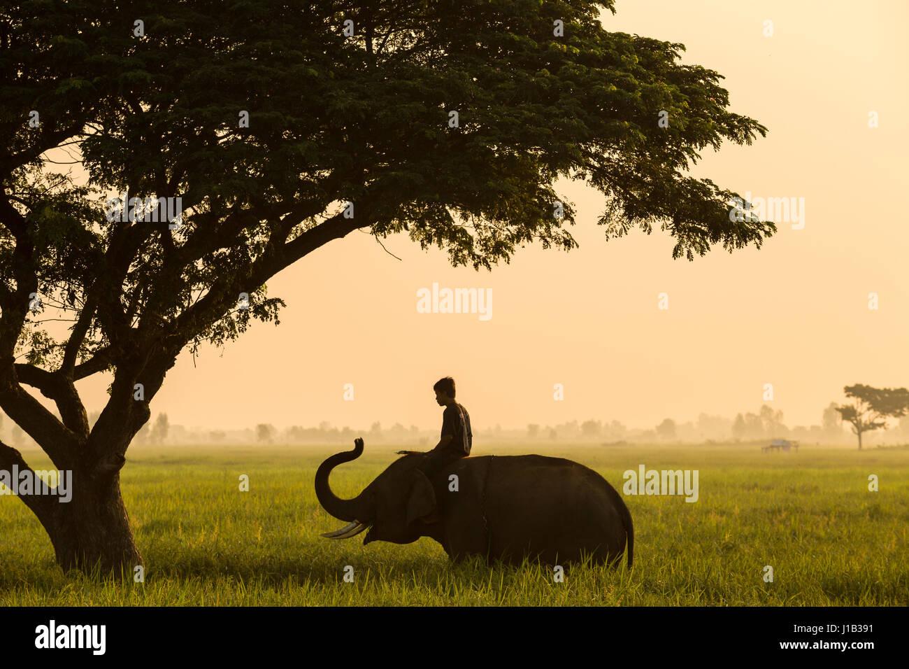 Come conduttore di elefanti in Thailandia la vita tradizionale della cultura in Asia Immagini Stock