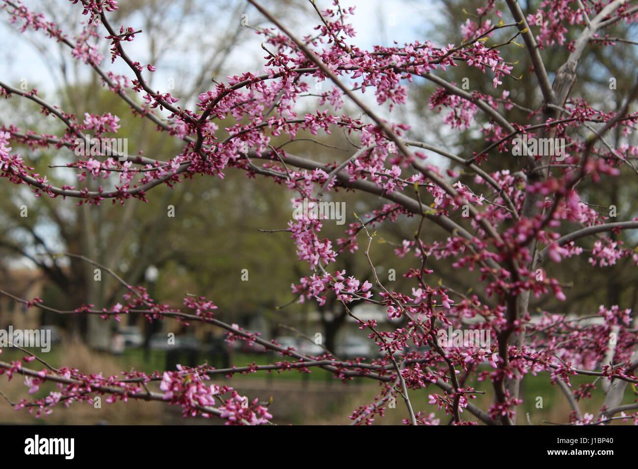 della natura rosa Immagini Stock