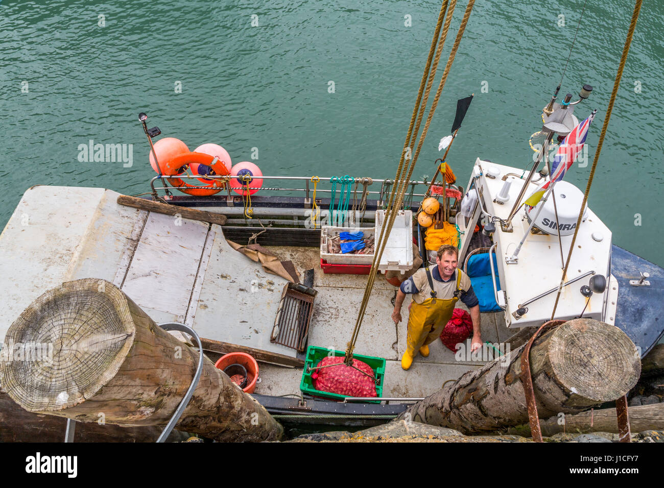 Clovelly,Devon, Inghilterra. Professional pescatori scaricano conchiglia il pescato del giorno in riparato porto Immagini Stock