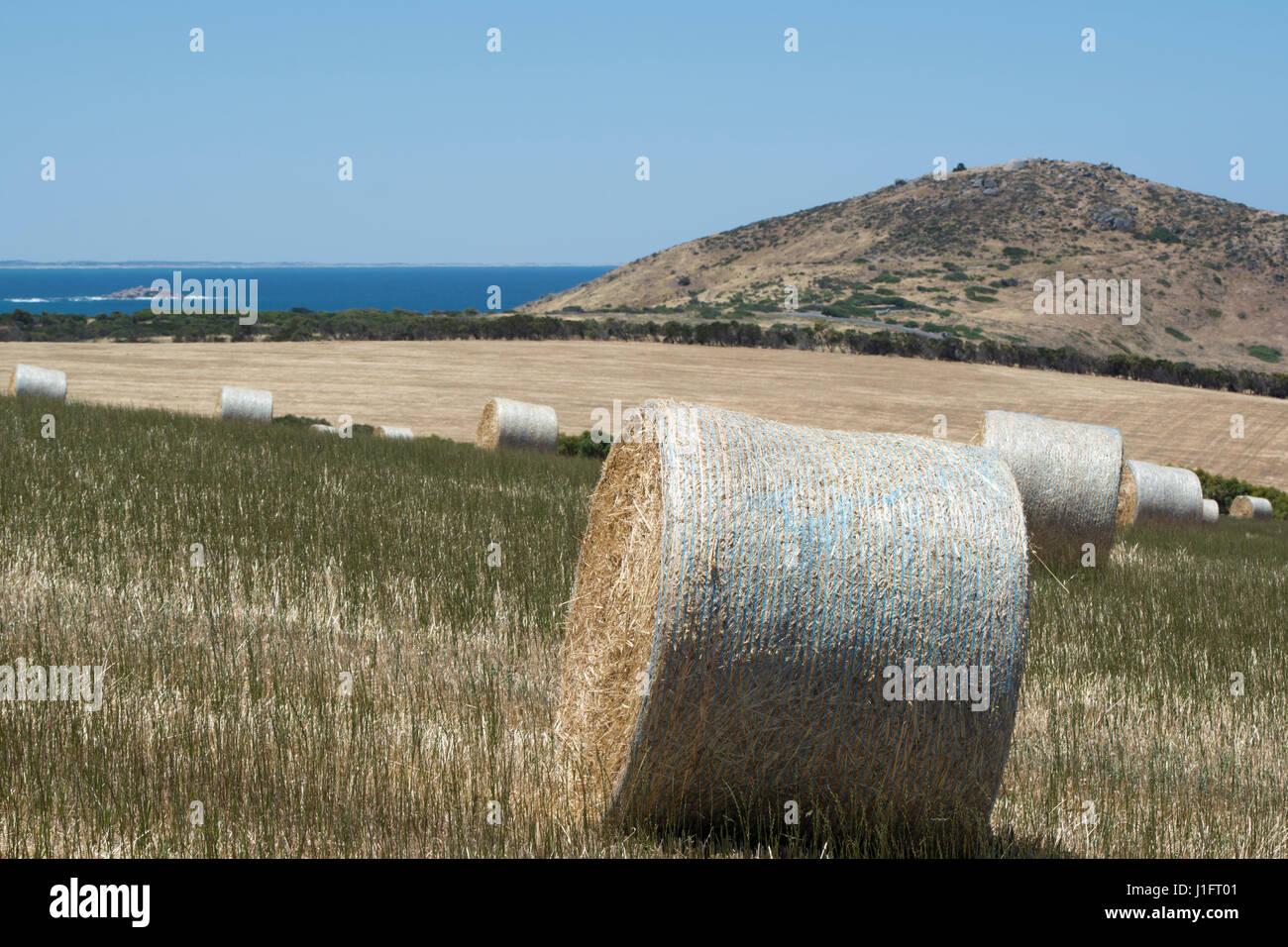 Settore della grande rotonda di balle di fieno in un campo situato a Kings Beach, Victor Harbor, Fleurieu Peninsula, Sud Australia. Il Bluff in distanza. Foto Stock