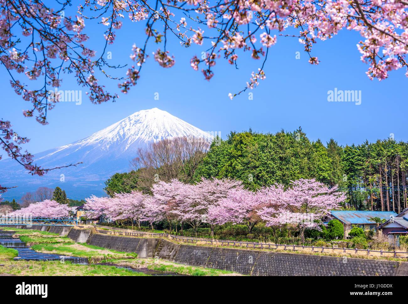 Shizuoka, Giappone a Mt. Fuji in primavera. Immagini Stock