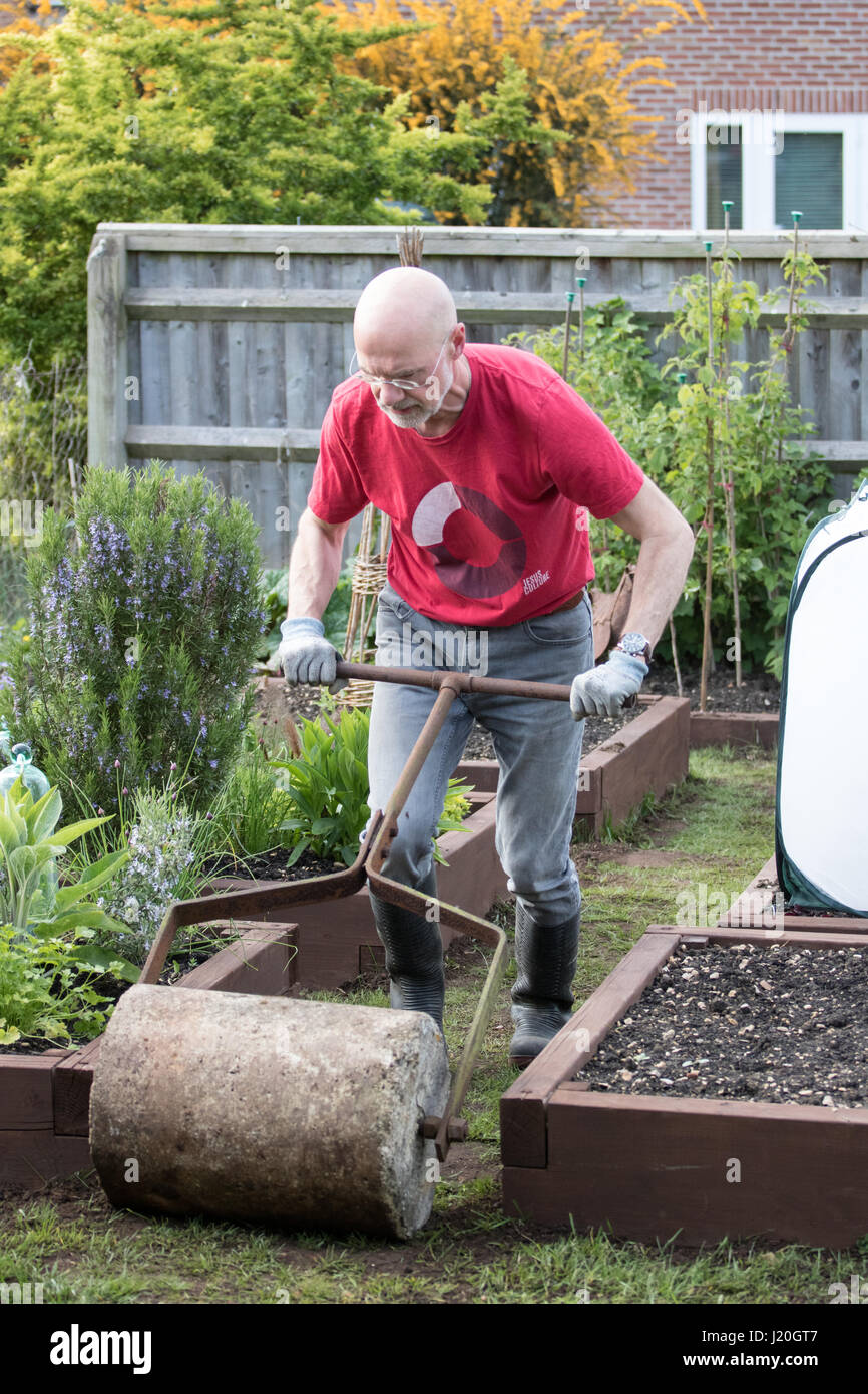Giardiniere amatoriale negli anni cinquanta il rotolamento di un prato che è stato recentemente seminato e top vestito Foto Stock