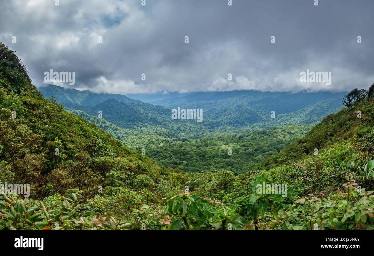 Cloud Forest coprendo bosque nuboso Monteverde in Costa Rica Immagini Stock