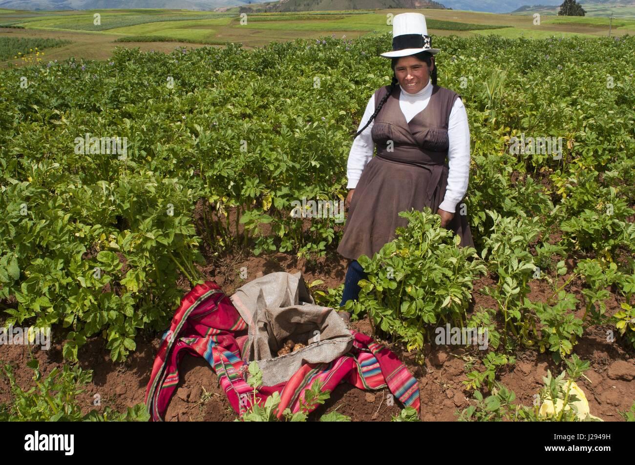 Una donna la coltivazione di patate in Valle Sacra nei pressi di Cuzco. La  Valle 9deb0253db06