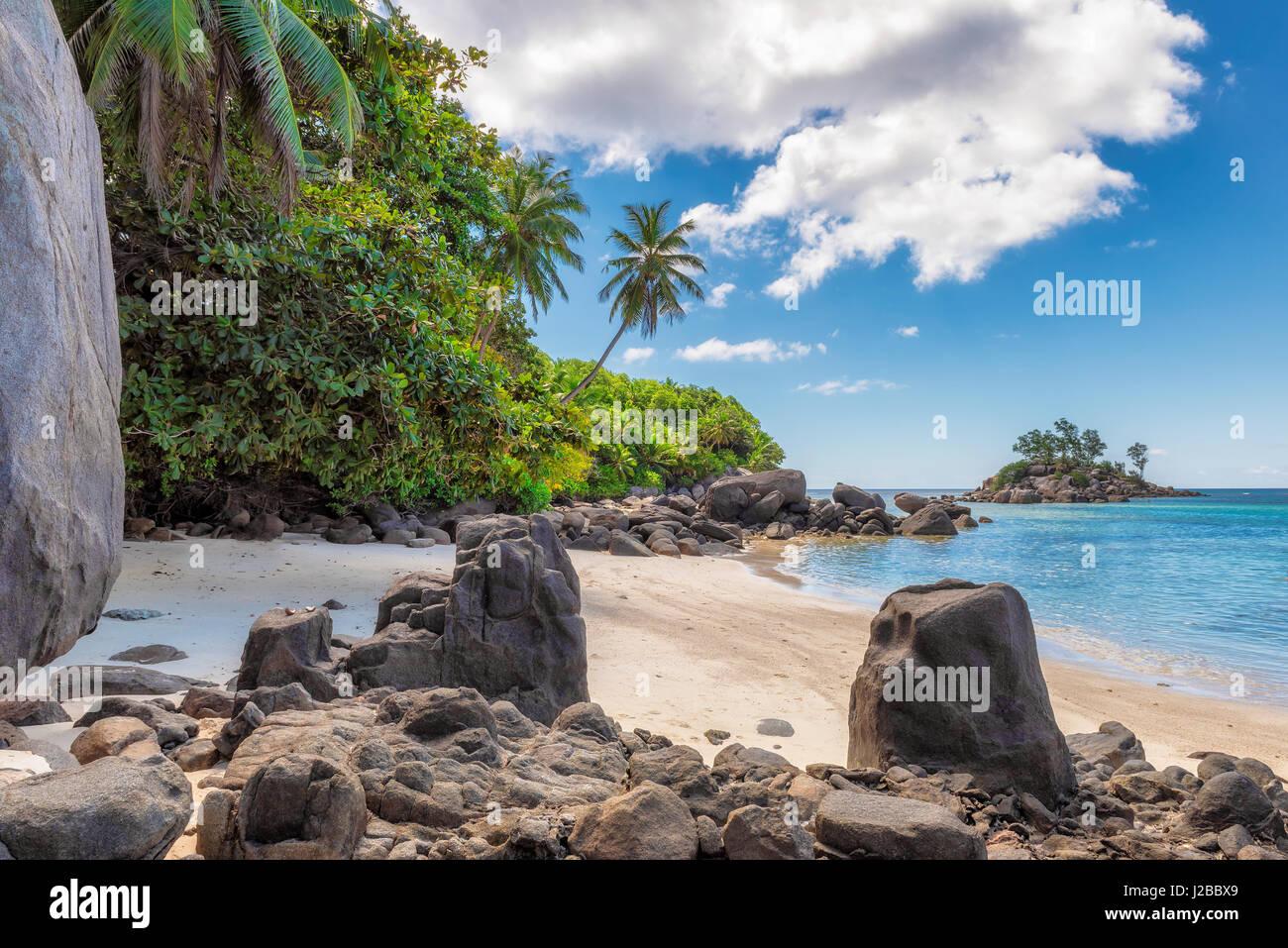Palme e splendide rocce sulla spiaggia, Isola di Mahe, Seicelle Immagini Stock