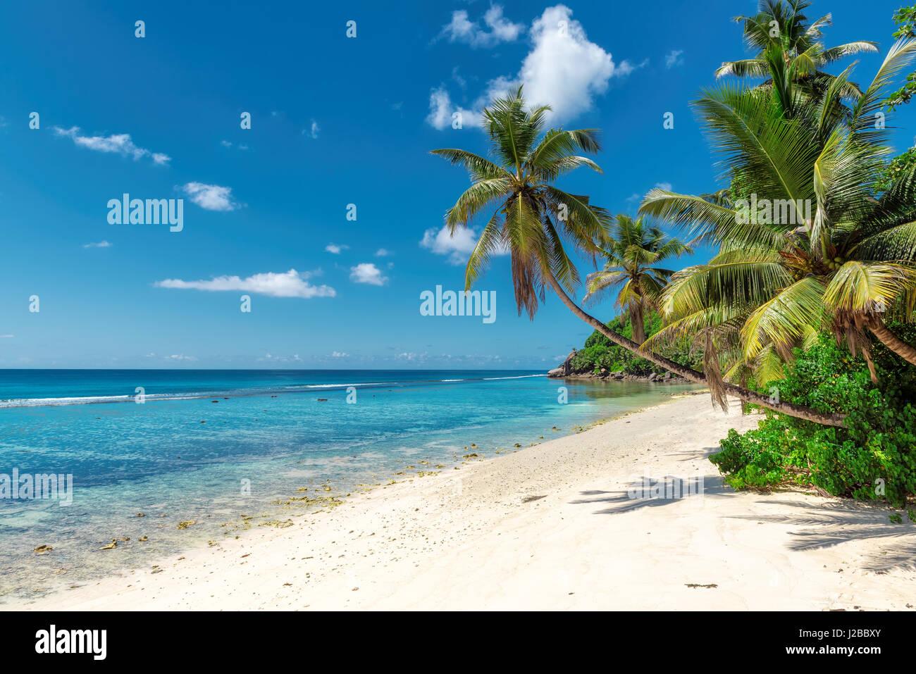Paradise oceano tropicale con spiaggia di sabbia bianca, trasparenti acque turchesi di cocco e di palma in una luminosa Immagini Stock