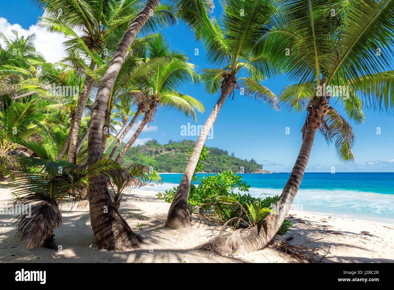 Vista sul sorprendente Anse Intendance beach, Isola di Mahe, Seychelles. Immagini Stock
