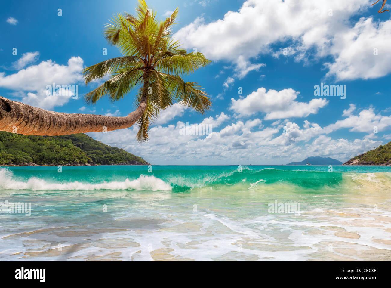 Tropical Ocean Beach con noce di cocco Palm tree in una luminosa giornata di sole. Immagini Stock