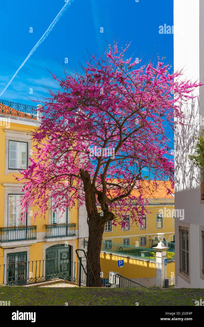 La molla tipica strada di Lisbona, Portogallo Immagini Stock