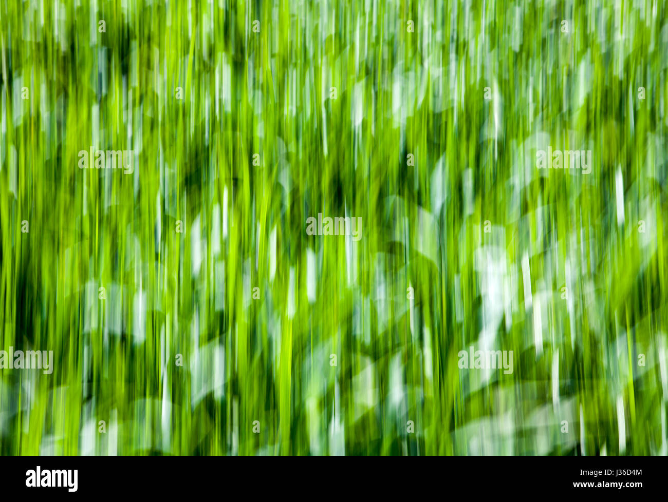 Linee astratte e strutture in erba verde, closeup, con una salvietta sfocata effetto Foto Stock