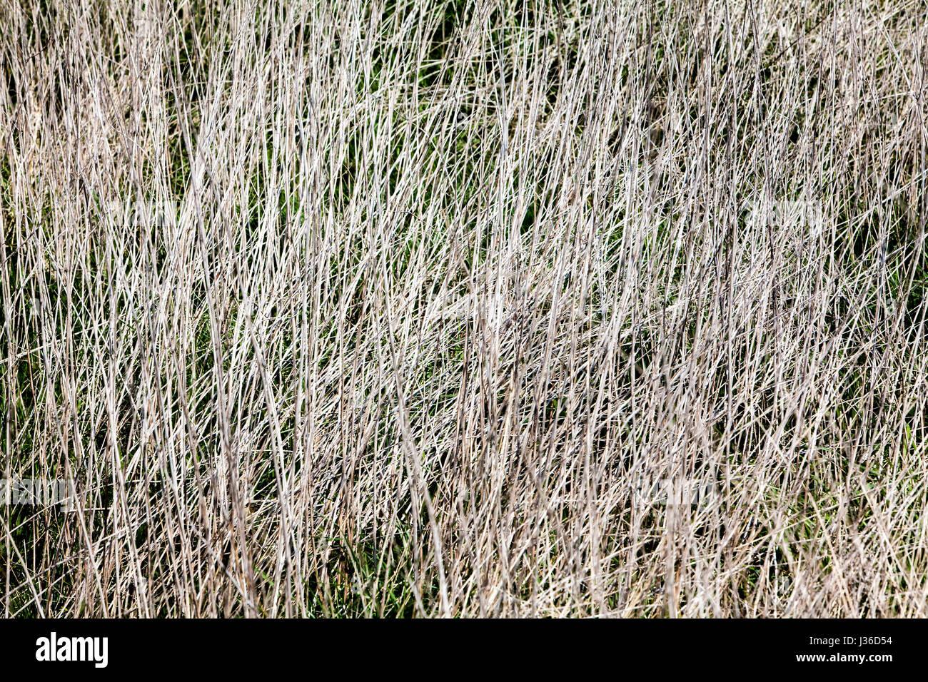Linee astratte e strutture in erba secca, primo piano Immagini Stock