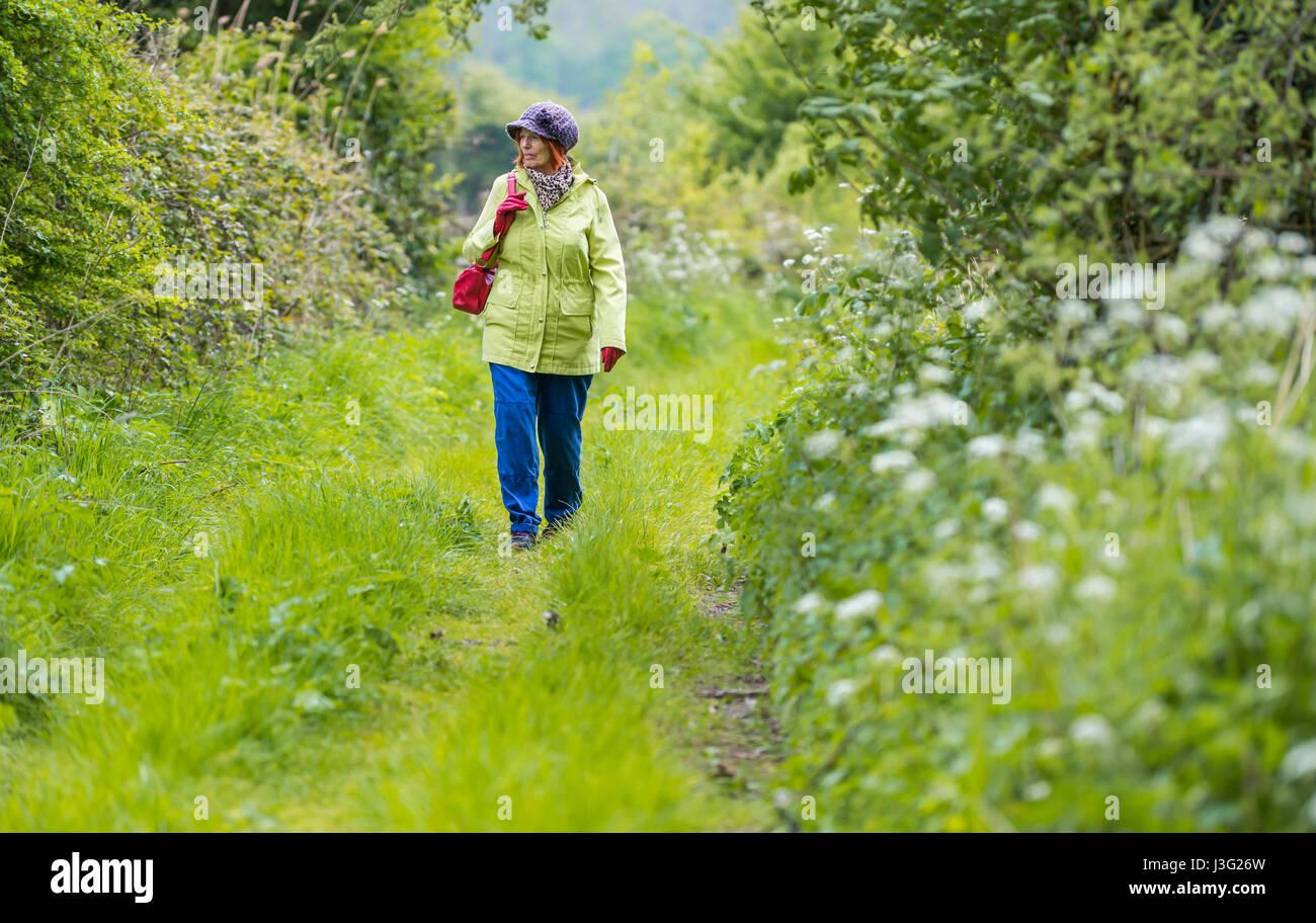 Campagna a piedi. Signora anziana a piedi lungo un erboso sentiero di campagna in primavera nel Regno Unito. Immagini Stock
