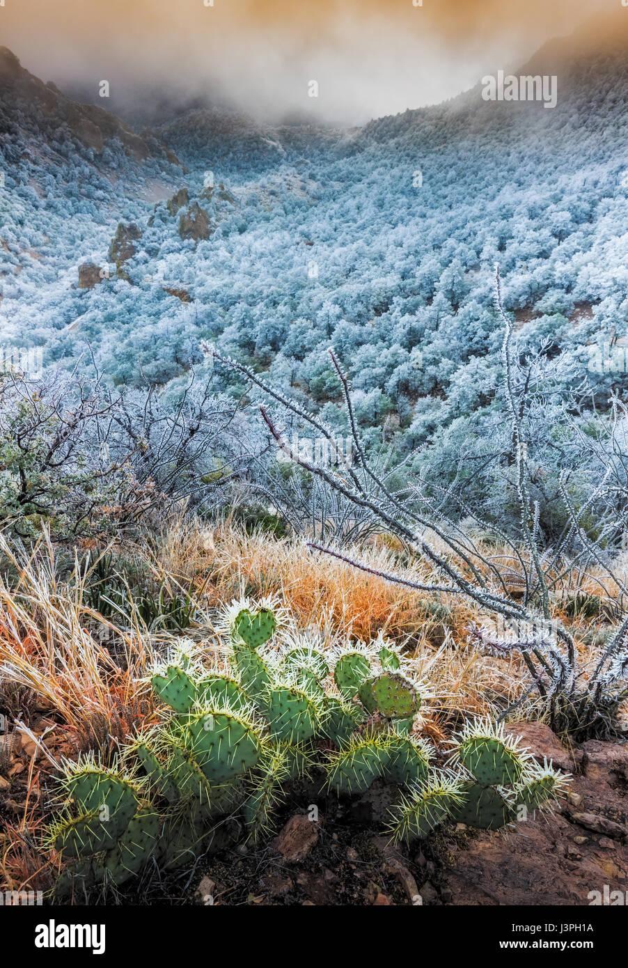 Parco nazionale di Big Bend in Texas ha importanza nazionale come la più grande area protetta del deserto del Immagini Stock