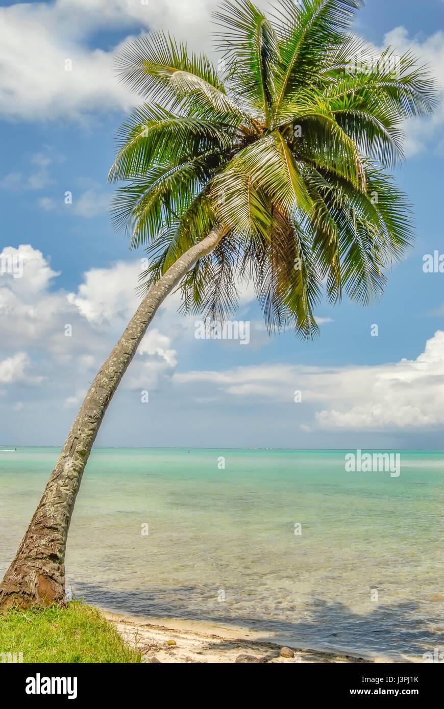Unica Palma nel cielo blu di Bora Bora Polinesia Francese Immagini Stock