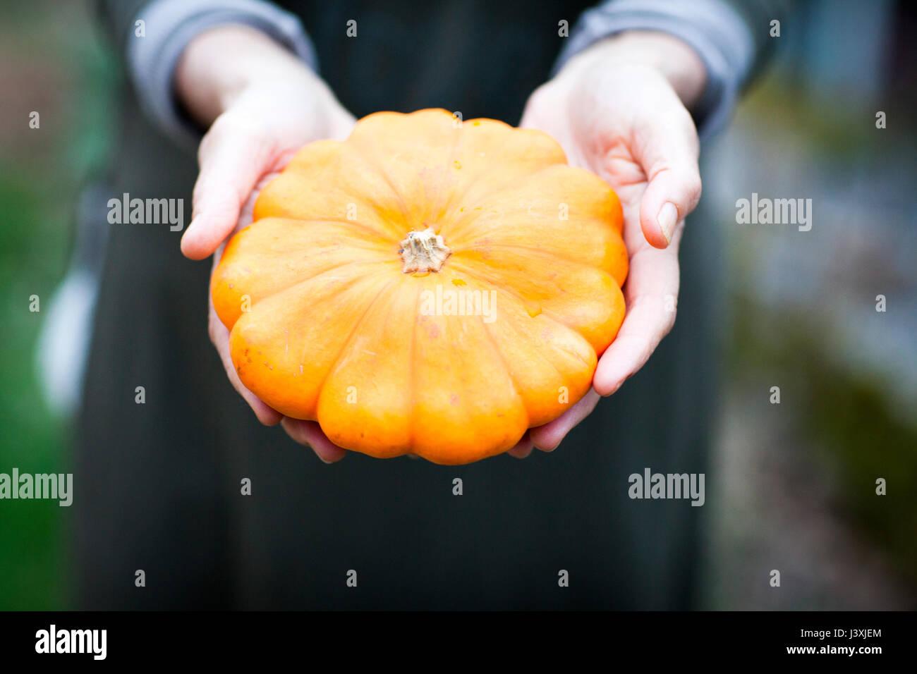 Le mani del giardiniere femmina azienda orange squash verdura Immagini Stock