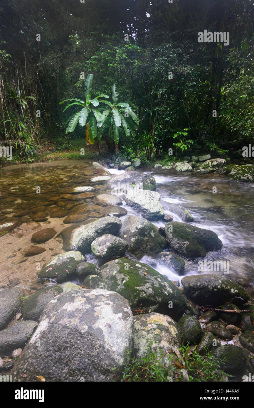 Insenatura di acqua dolce nella foresta pluviale tropicale, Bellenden Ker, estremo Nord Queensland, QLD, FNQ, Australia Immagini Stock