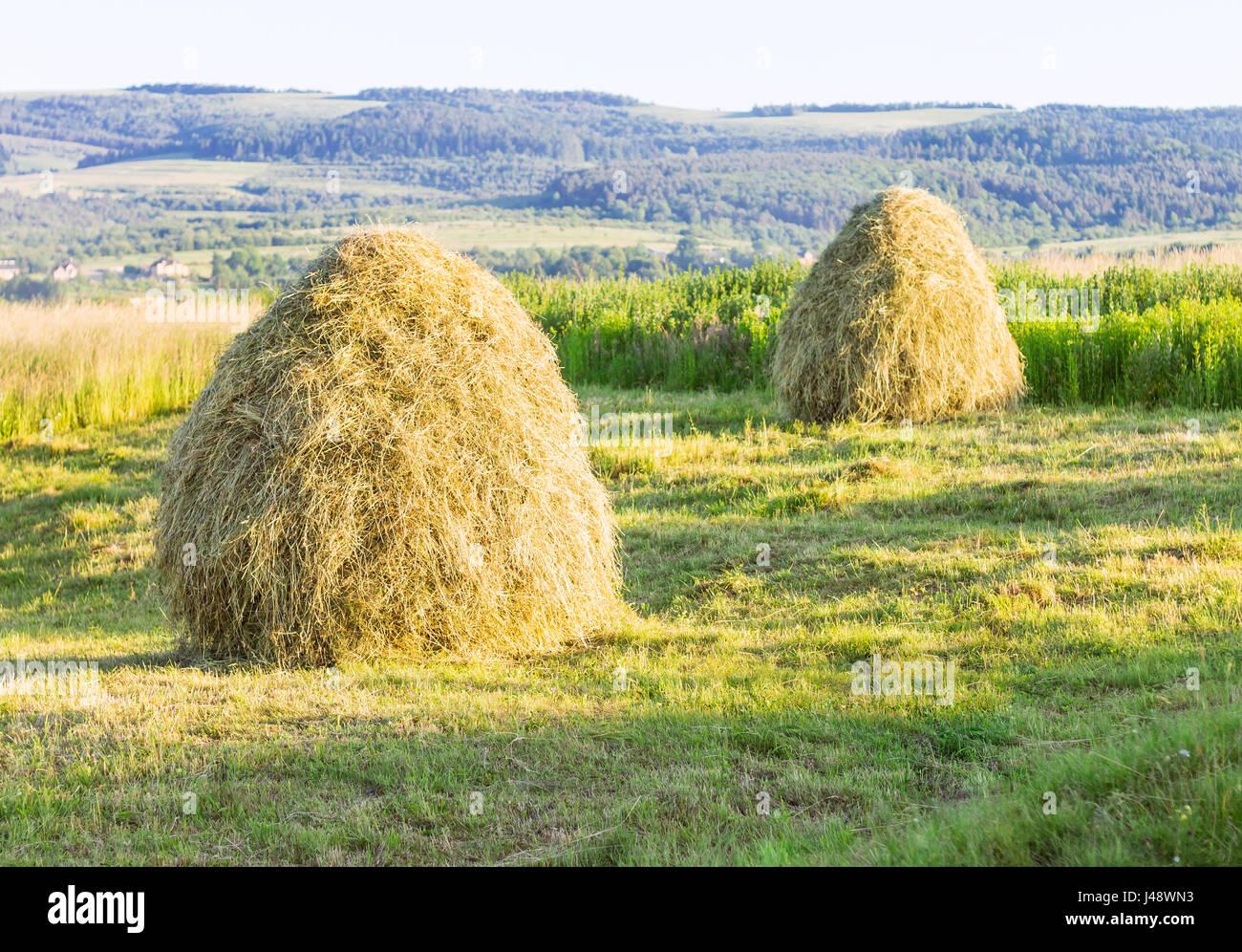 Pila Di Fieno Sul Campo Paesaggio Di Campagna Con Haycock In Estate
