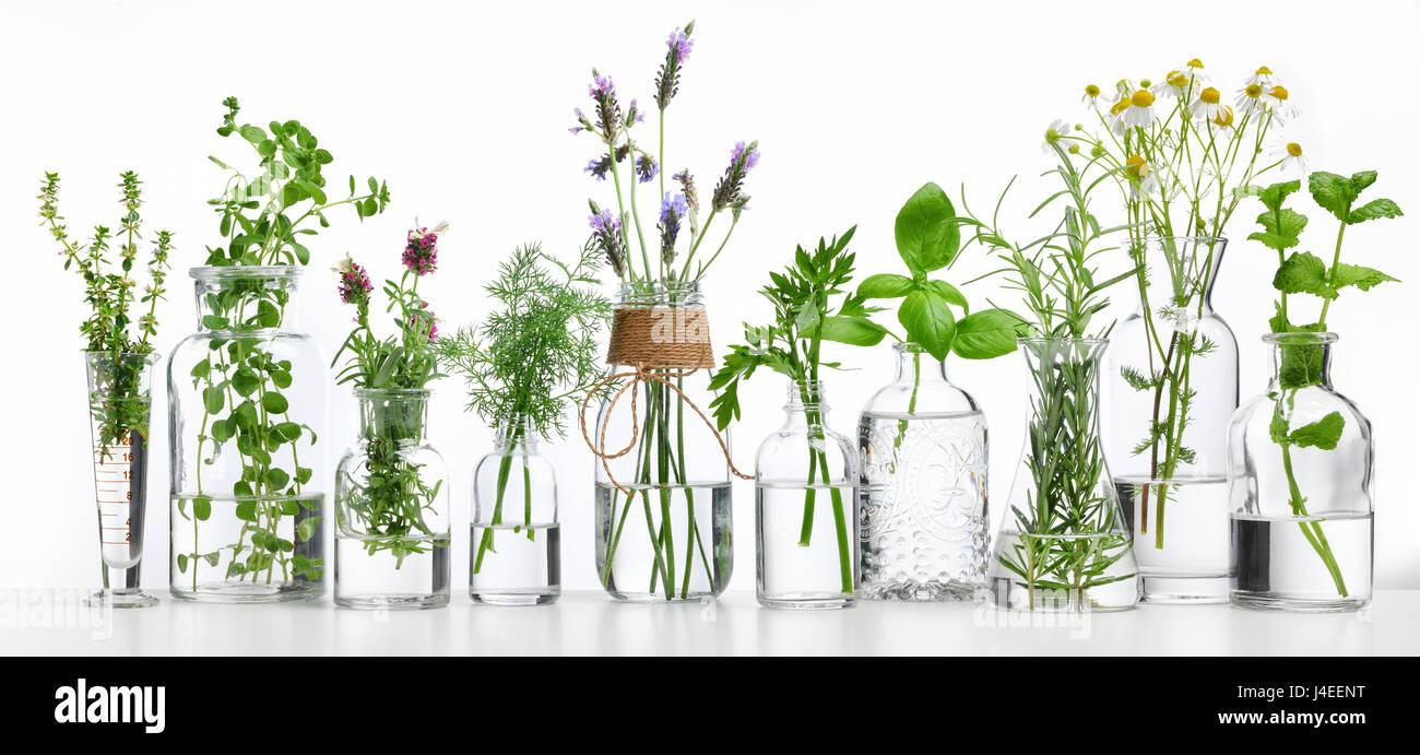 Bottiglia di olio essenziale alle erbe su sfondo bianco Immagini Stock