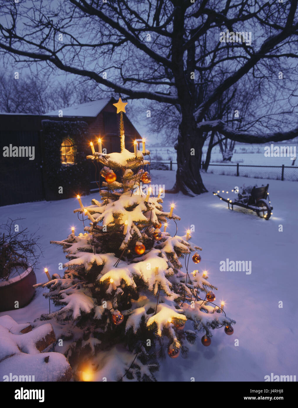 Germania bassa sassonia agriturismo giardino albero di natale crepuscolo inverno casa - Giardino di inverno ...