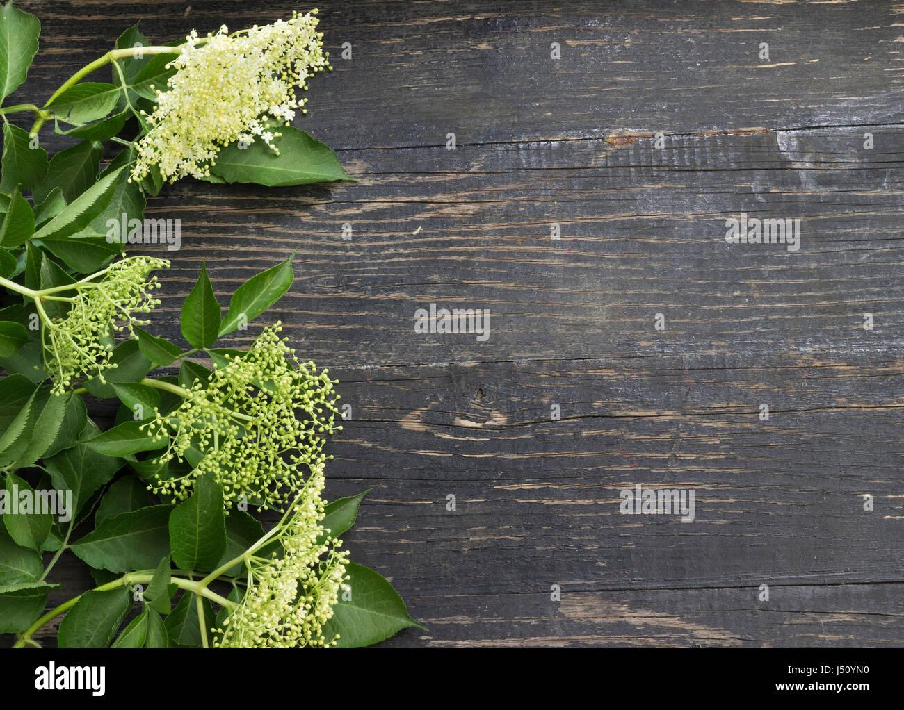 Il sambuco ingredienti di succo di mele presenti Foto Stock