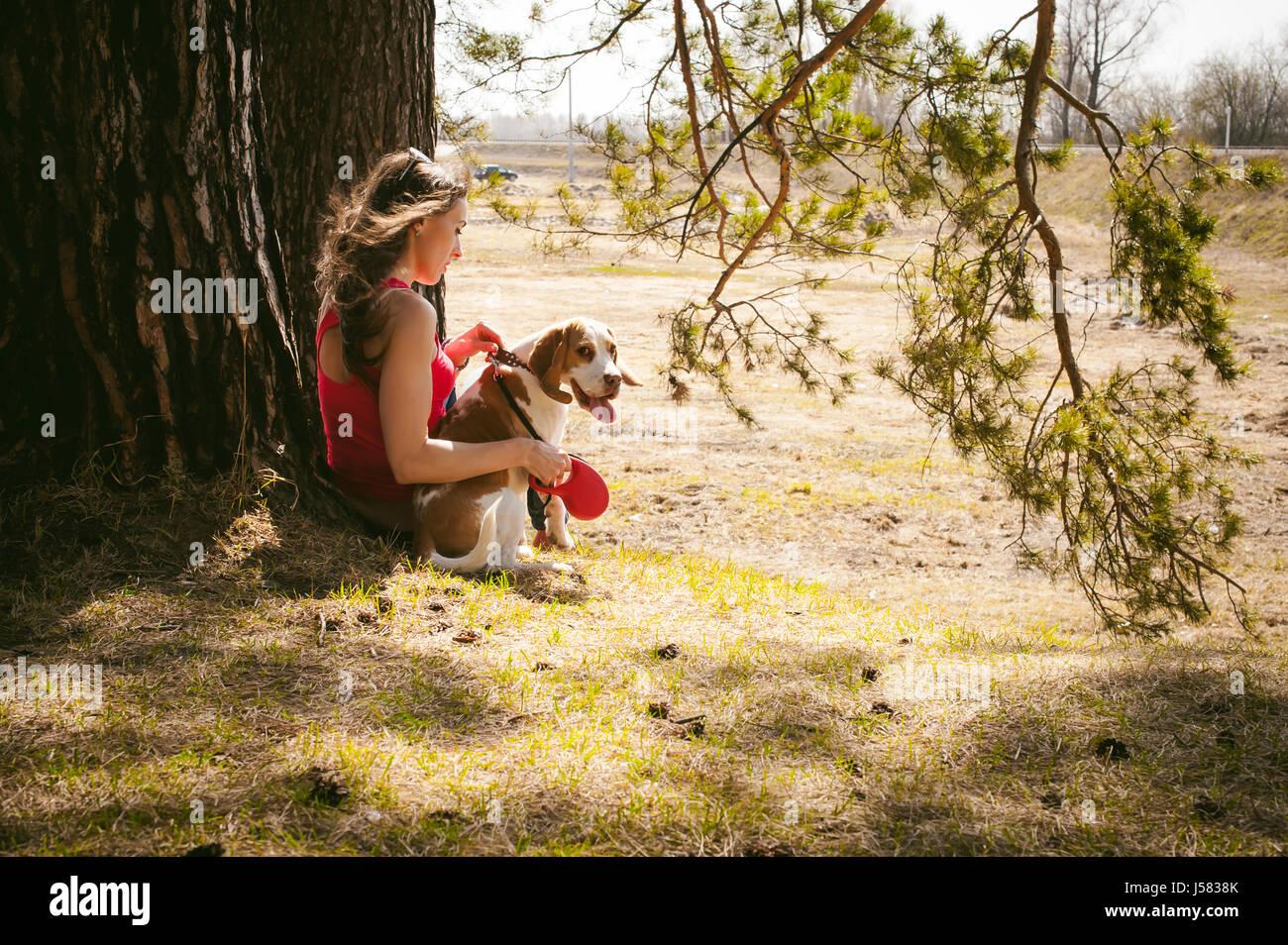 I giovani animali di razze di cani beagle passeggiate nel parco all'aperto. donna cammina con cautela cucciolo, Immagini Stock