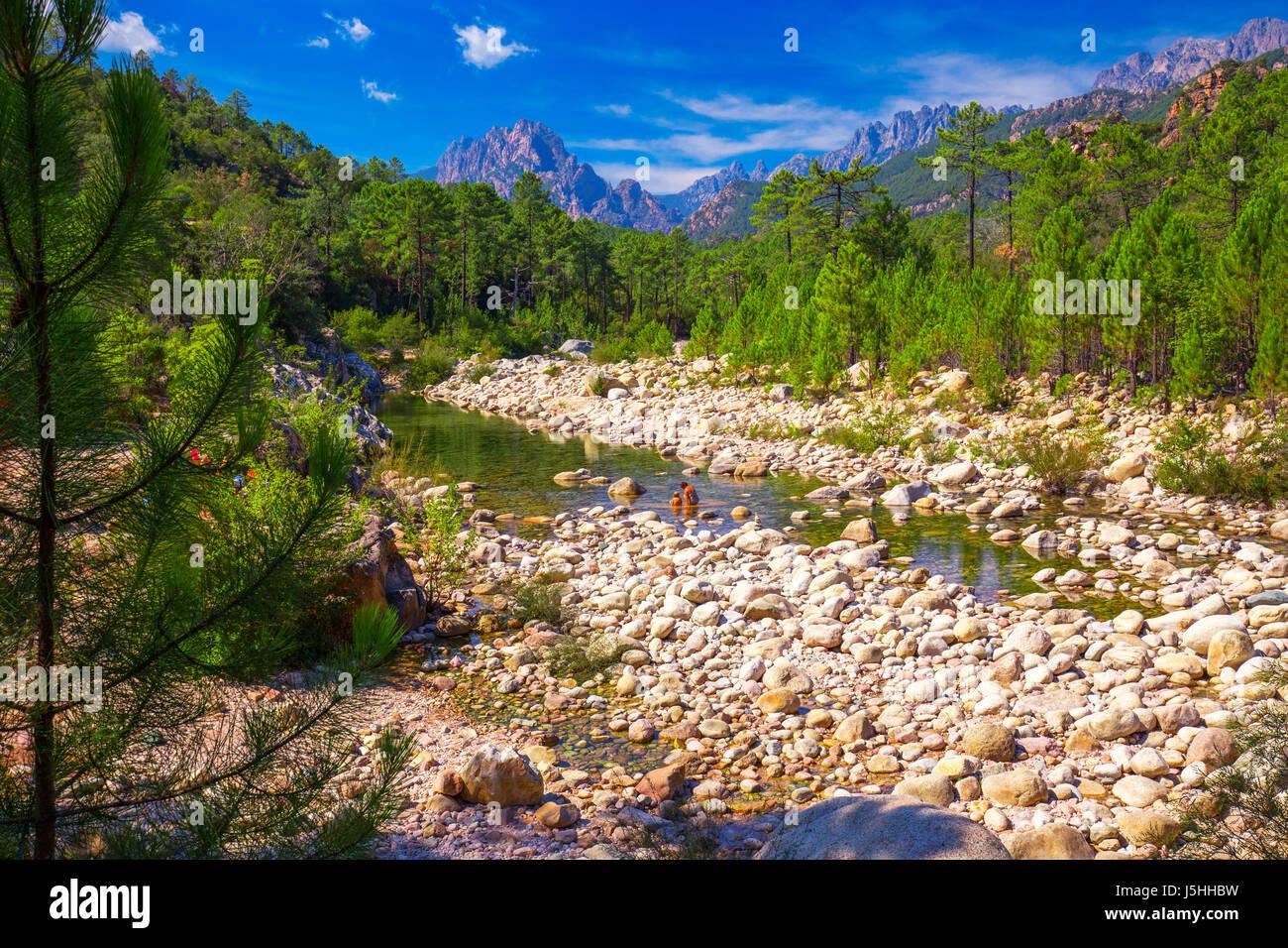 Alberi di pino al Col de Bavella montagne vicino Zonza town, Corsica, Francia, Europa. Immagini Stock