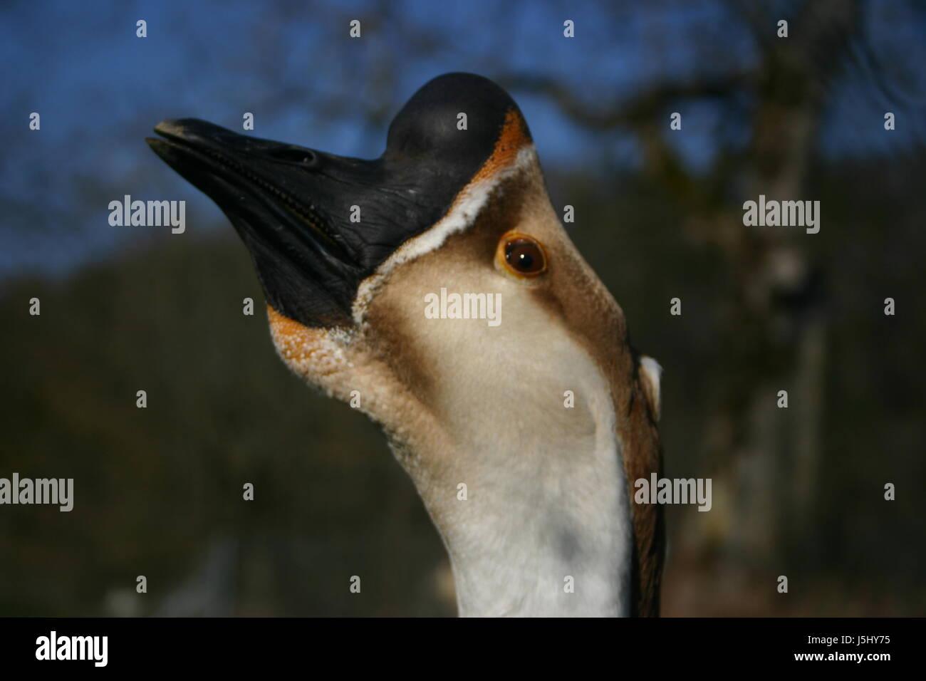 Sgabello giardino occhio di uccelli uccelli di organo occhi piume