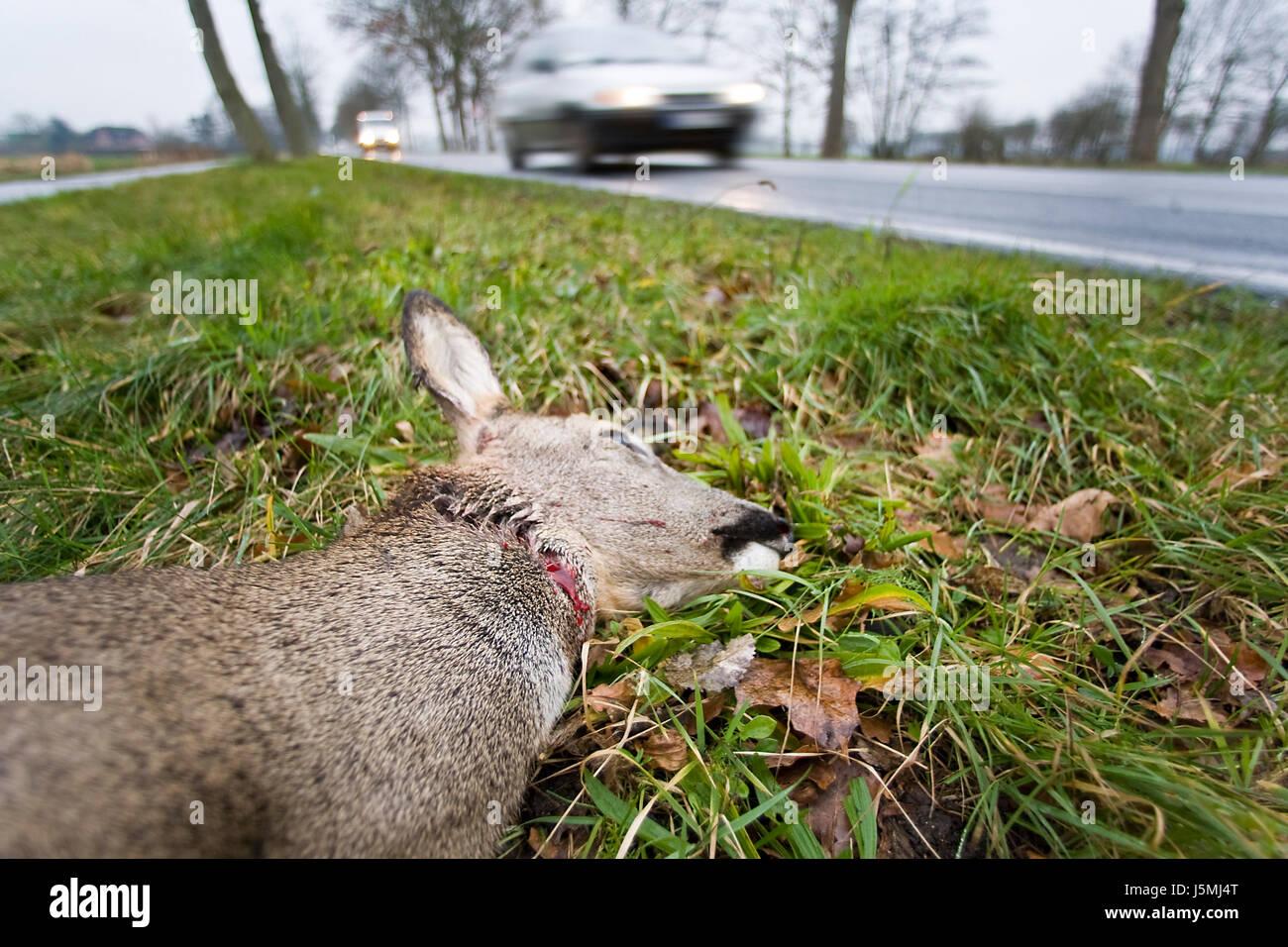 Pericolo automobile automobile mezzi di viaggio incidente automobilistico il traffico Foto Stock