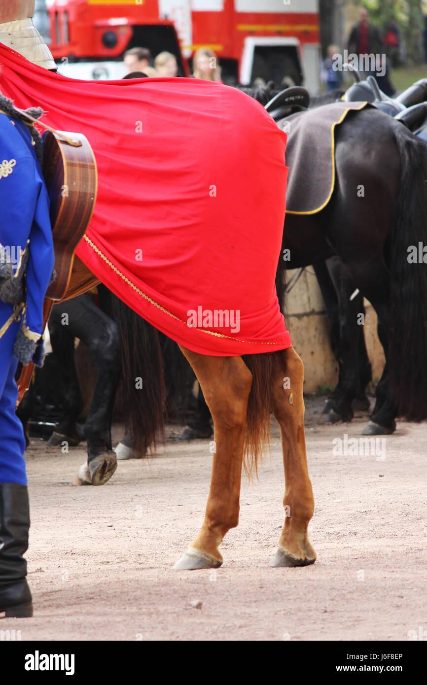 Groppa di cavallo Equus caballus, coperto con un mantello rosso su una performance al City giorno Gatchina dalla Immagini Stock