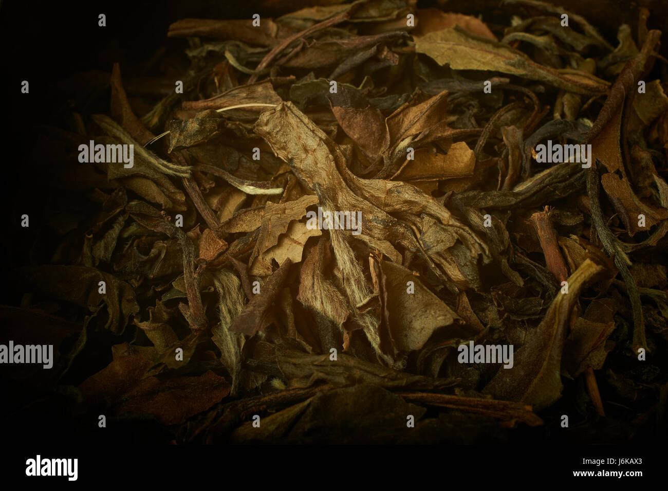 Darjeeling tè a foglia stretta fino Immagini Stock