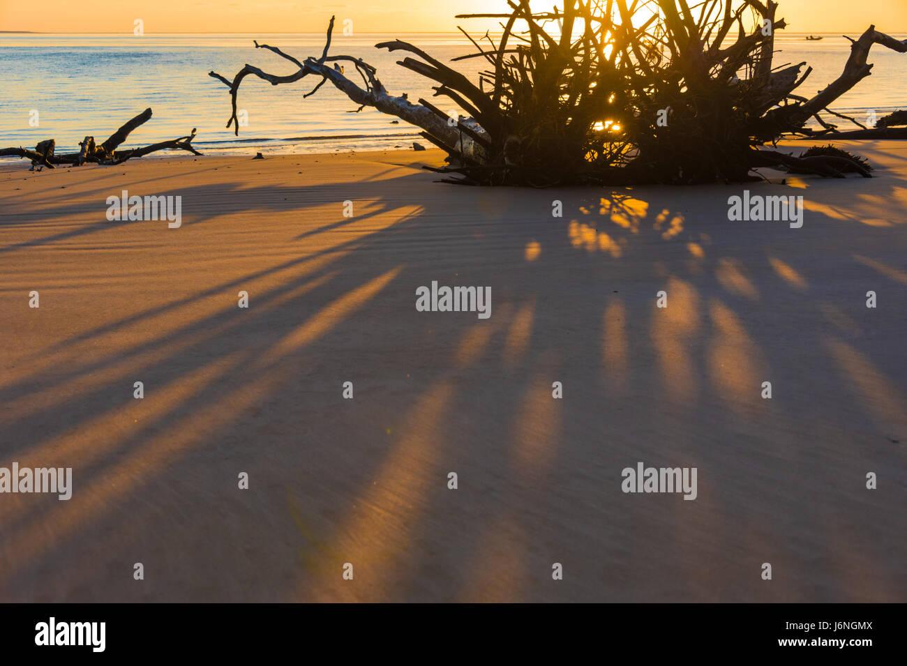 Driftwood radici gettato ombre lunghe in un colorato sunrise mattina al cimitero in spiaggia a nord-est della Florida la grande Talbot Island State Park. Foto Stock