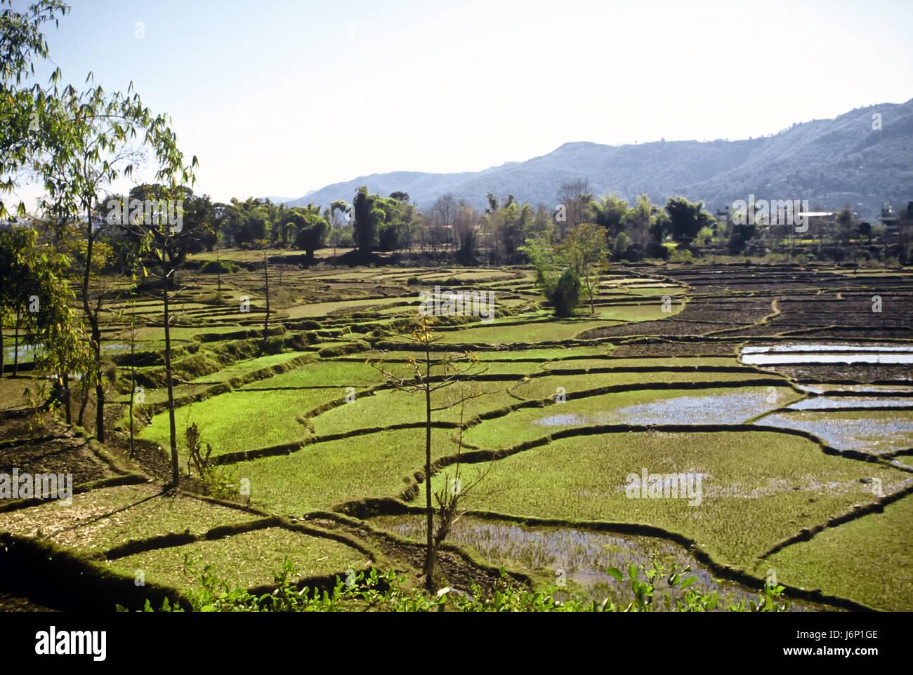 Asia la coltivazione del riso in Nepal Himalaya terrazza bellissima ...