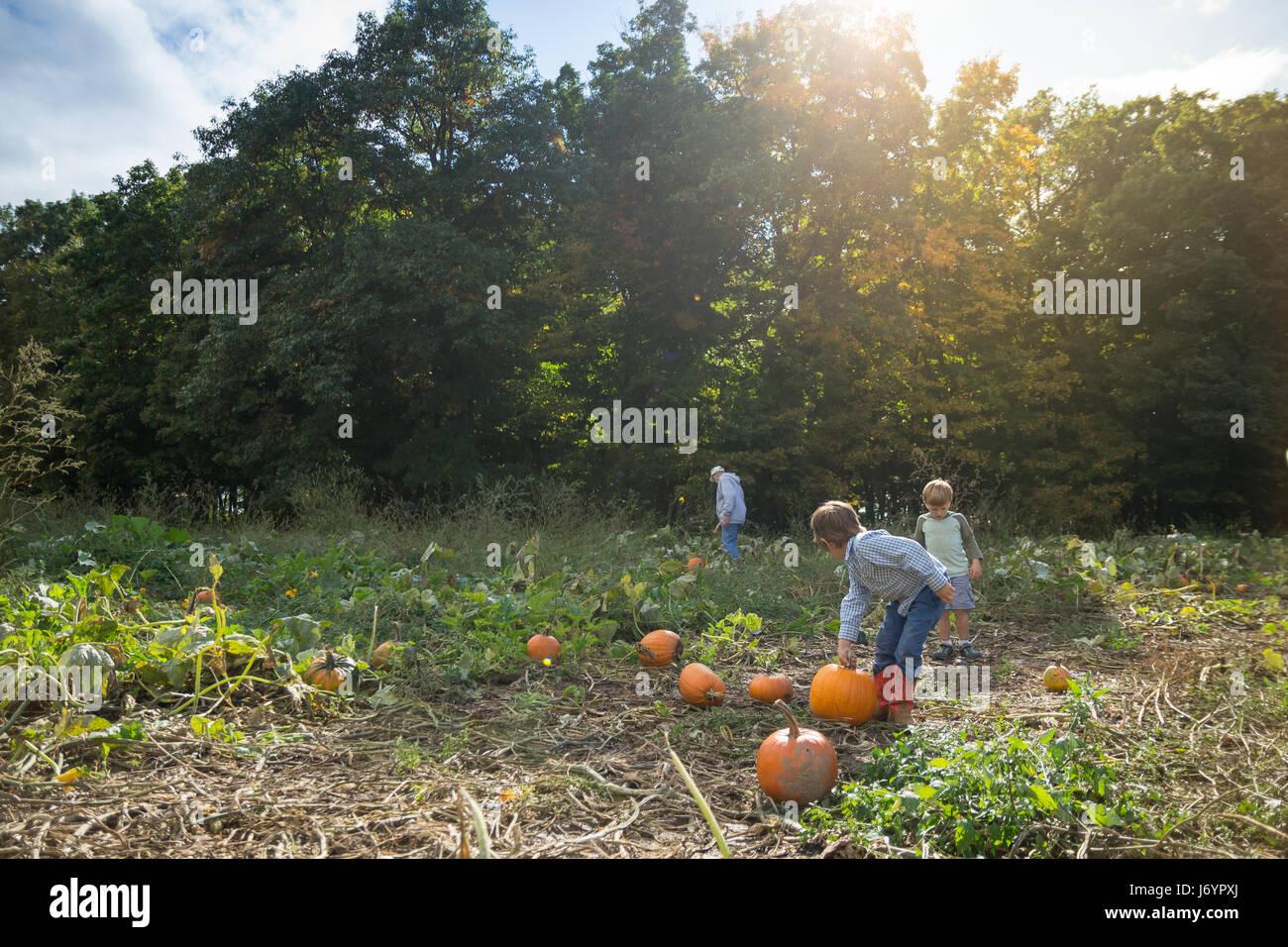 Nonno Raccolta zucche in un orto di zucche con due nipoti Foto Stock