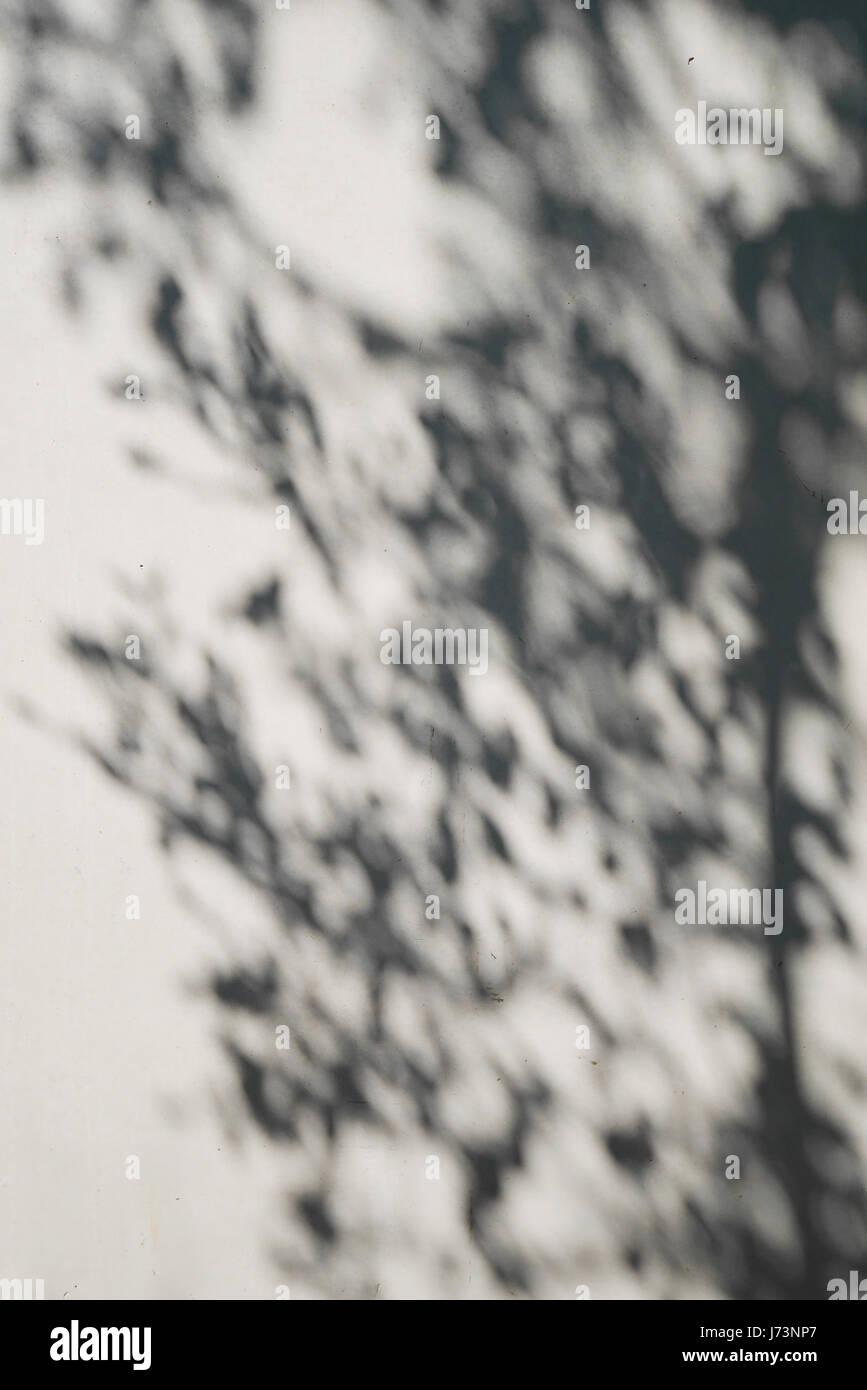 Ombra di albero sulla parete in gesso. Immagini Stock