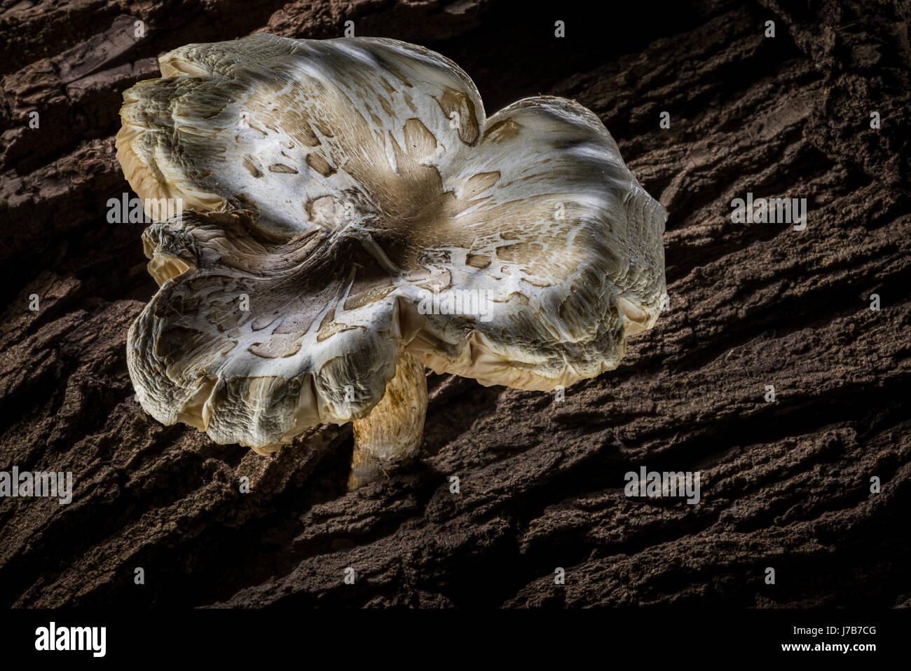 Grande fungo bianco dettaglio Immagini Stock