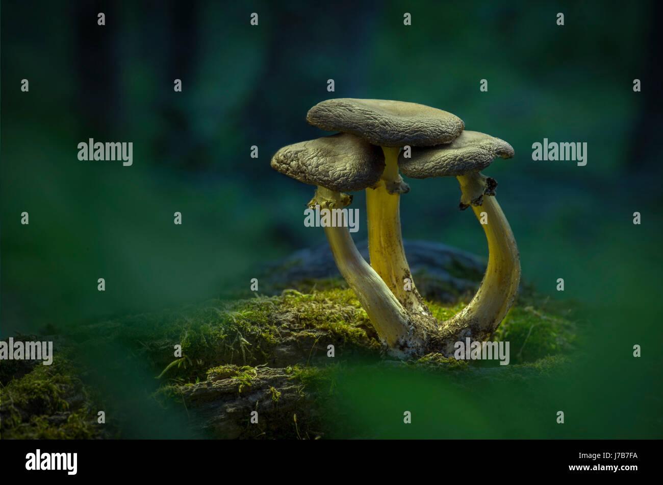Tre i funghi sul pavimento della foresta Immagini Stock
