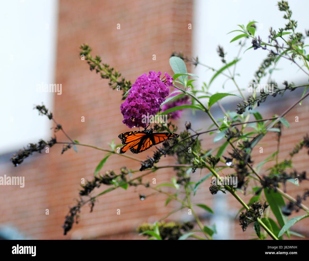 Baci a farfalla Immagini Stock
