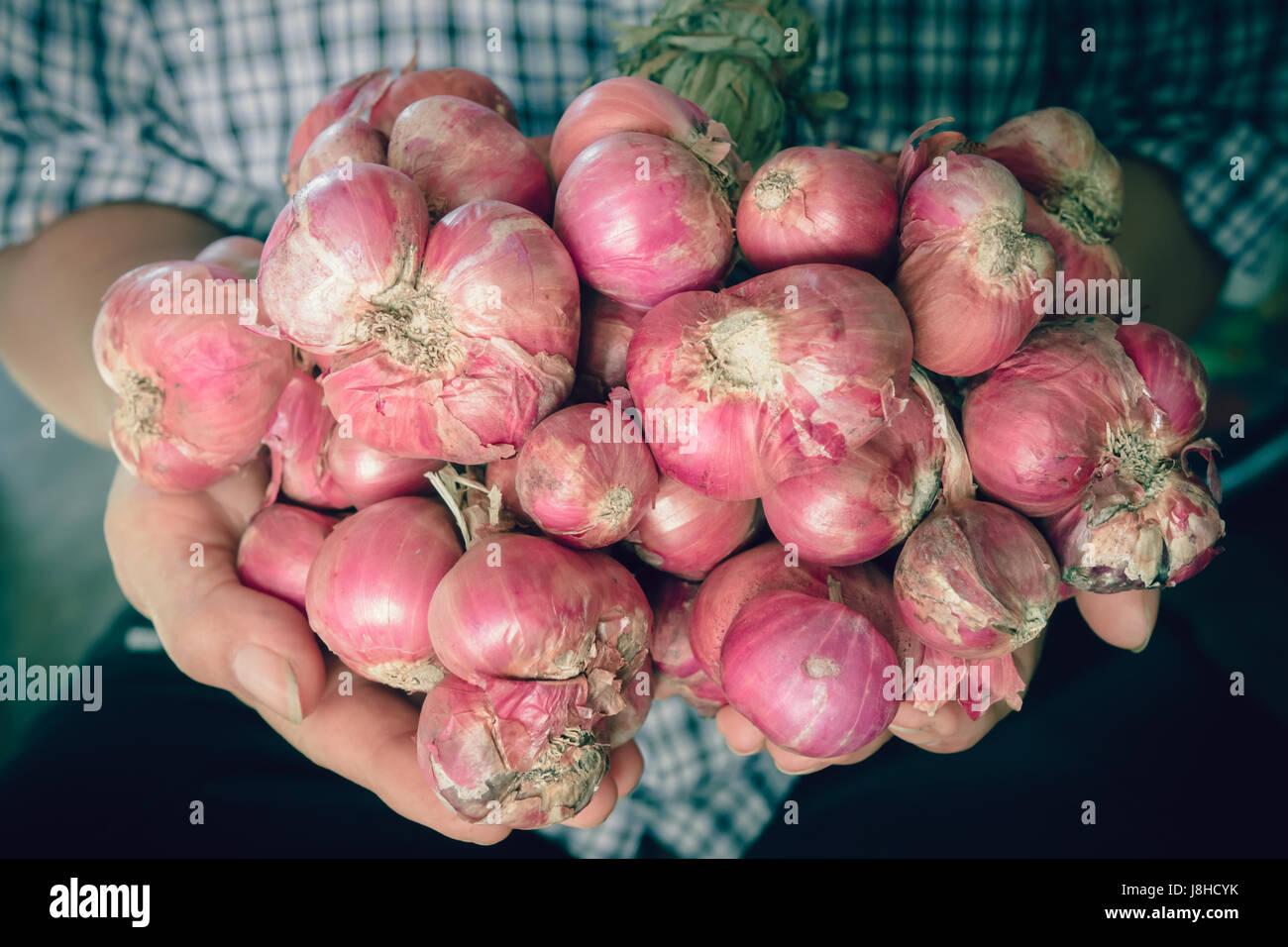 Scalogni ancora la vita della lampadina di cipolla stagione erbe ingrediente vegetale a portata di mano Immagini Stock