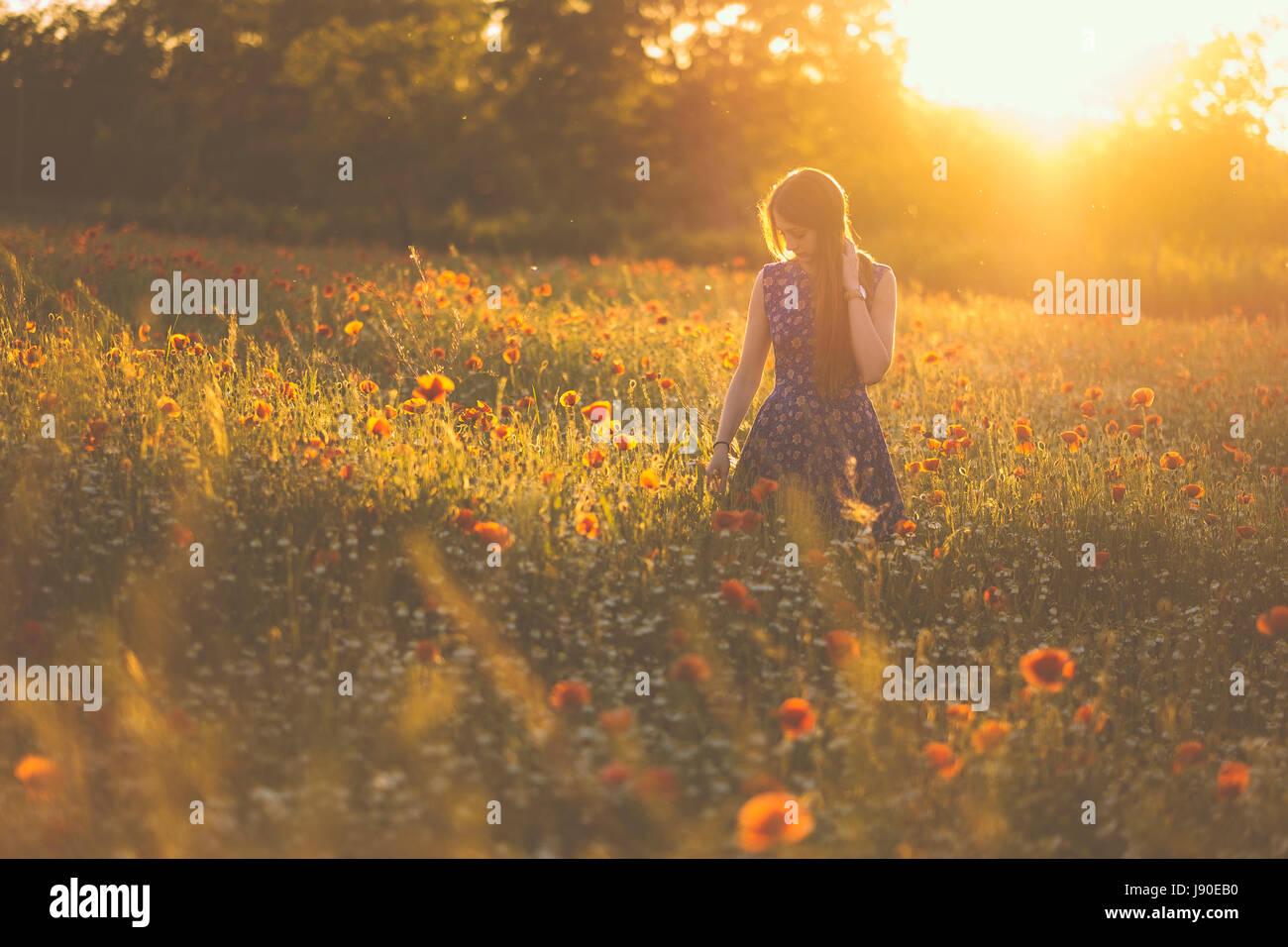 Donna al campo di papavero in estate tramonto Immagini Stock